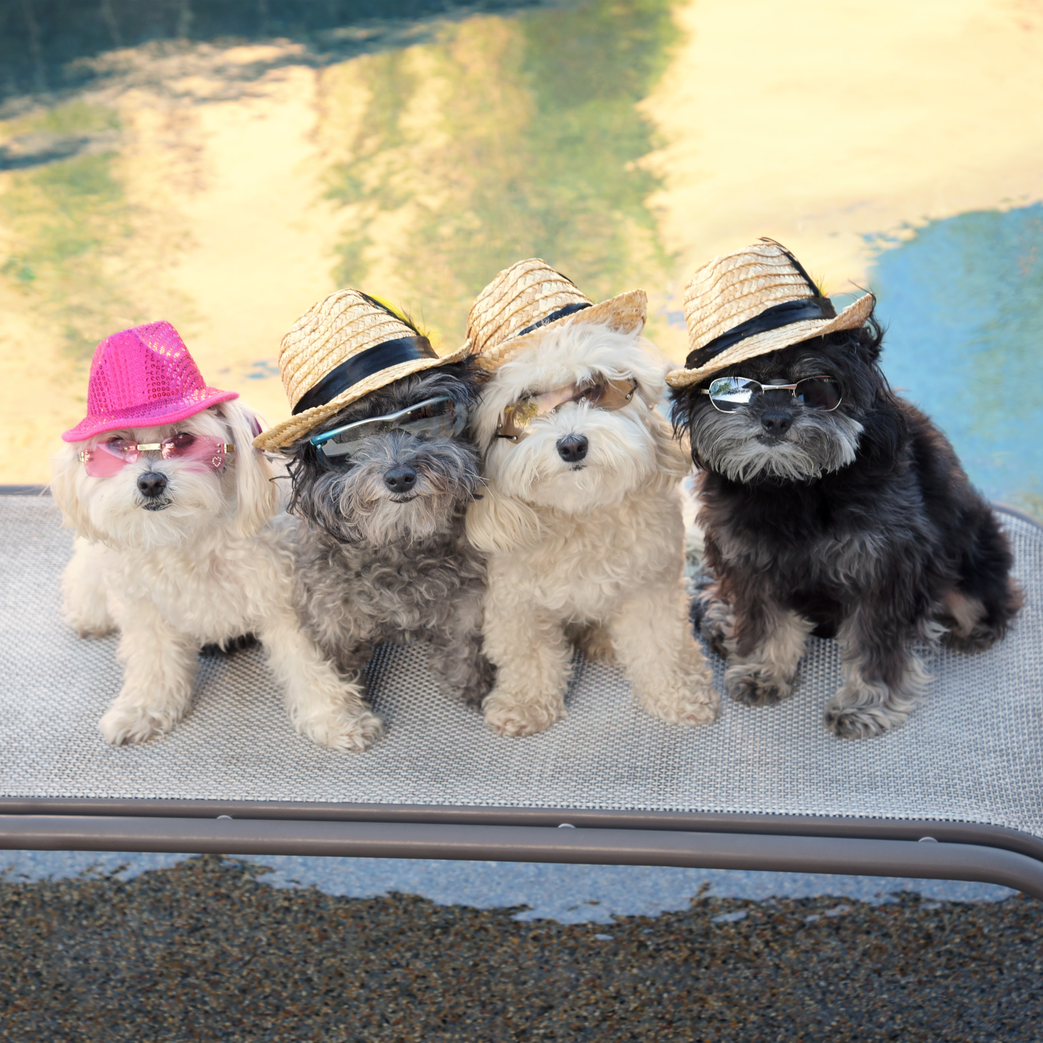 There's nothing quite like the feeling of coming home! If you need us, we'll be out here chilling by the pool! Bring us those pina coladas, Mom!