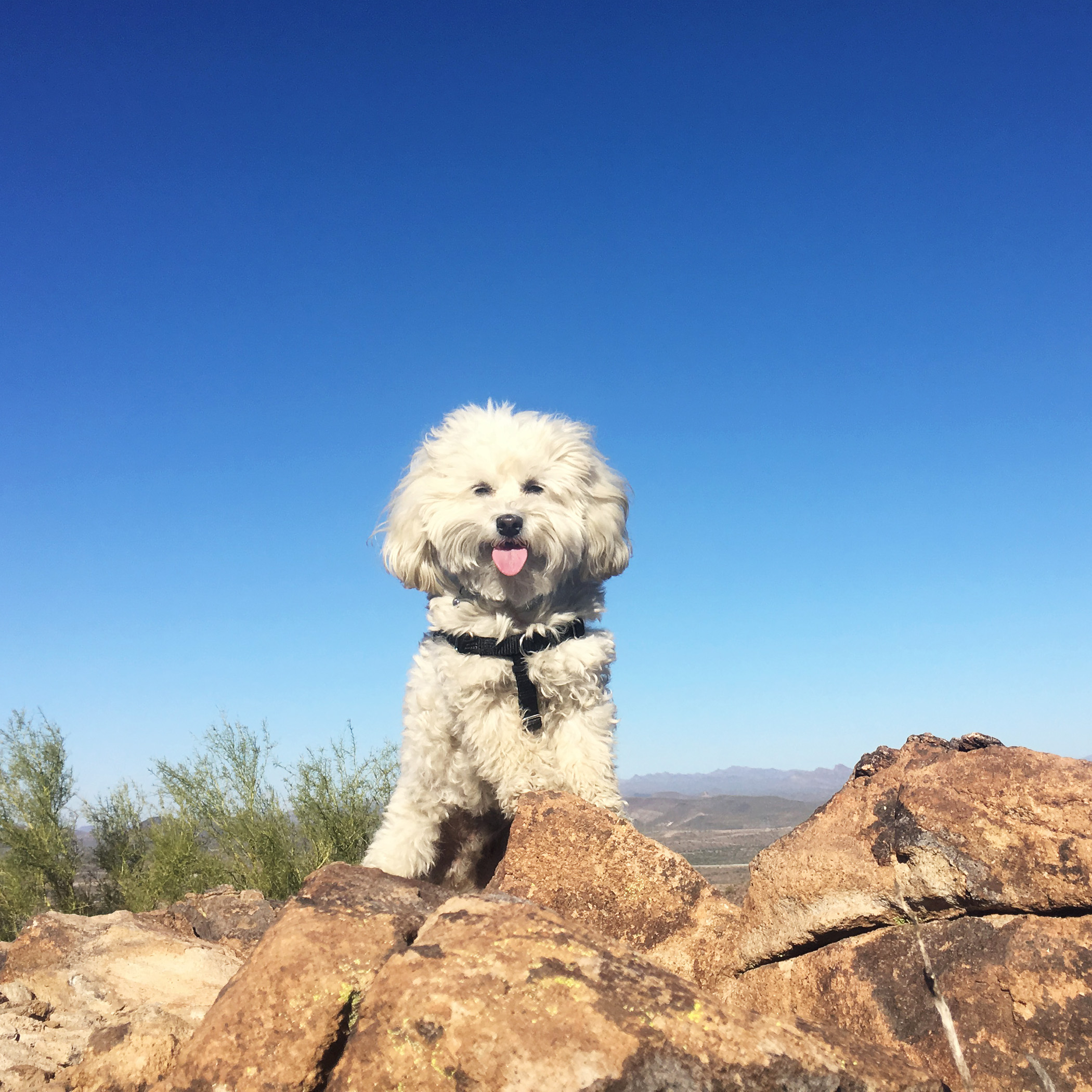 King of the Mountain!! Come on tell me you've never wanted to do that?!?