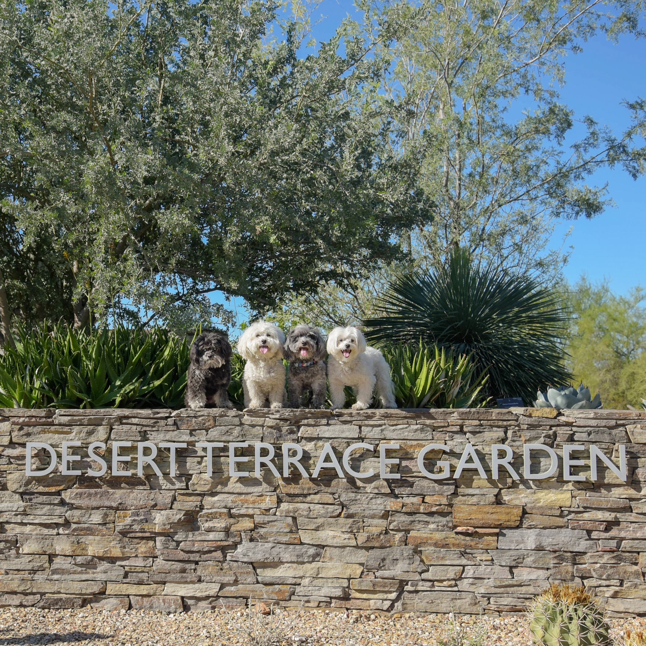 Just four little pups exploring the big, beautiful desert!