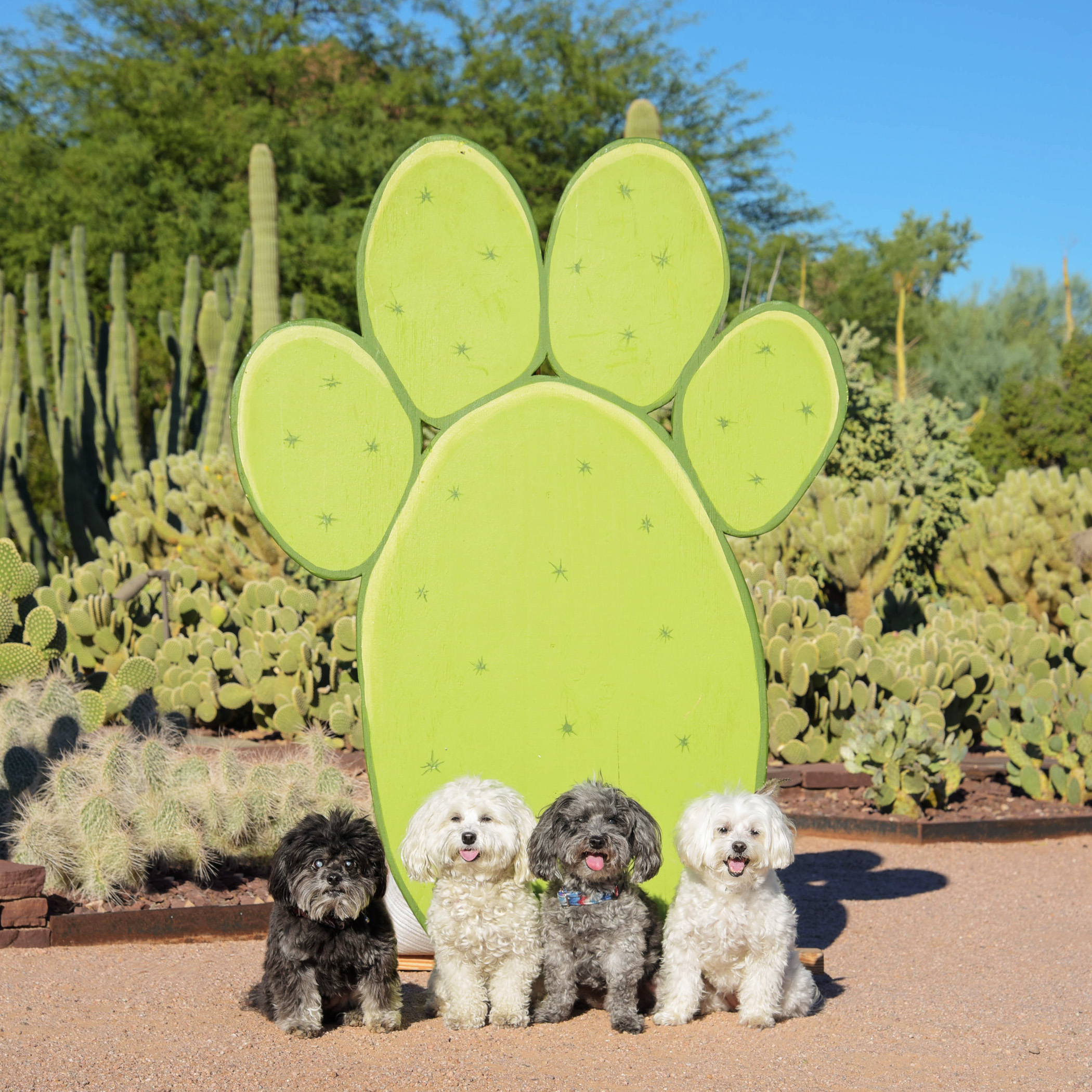 Woah, a gigantic cactus in the shape of a puppy paw! What are the chances of finding something like that at the Desert Botanical Gardens?!? And, the best part…it didn't have any stickers!