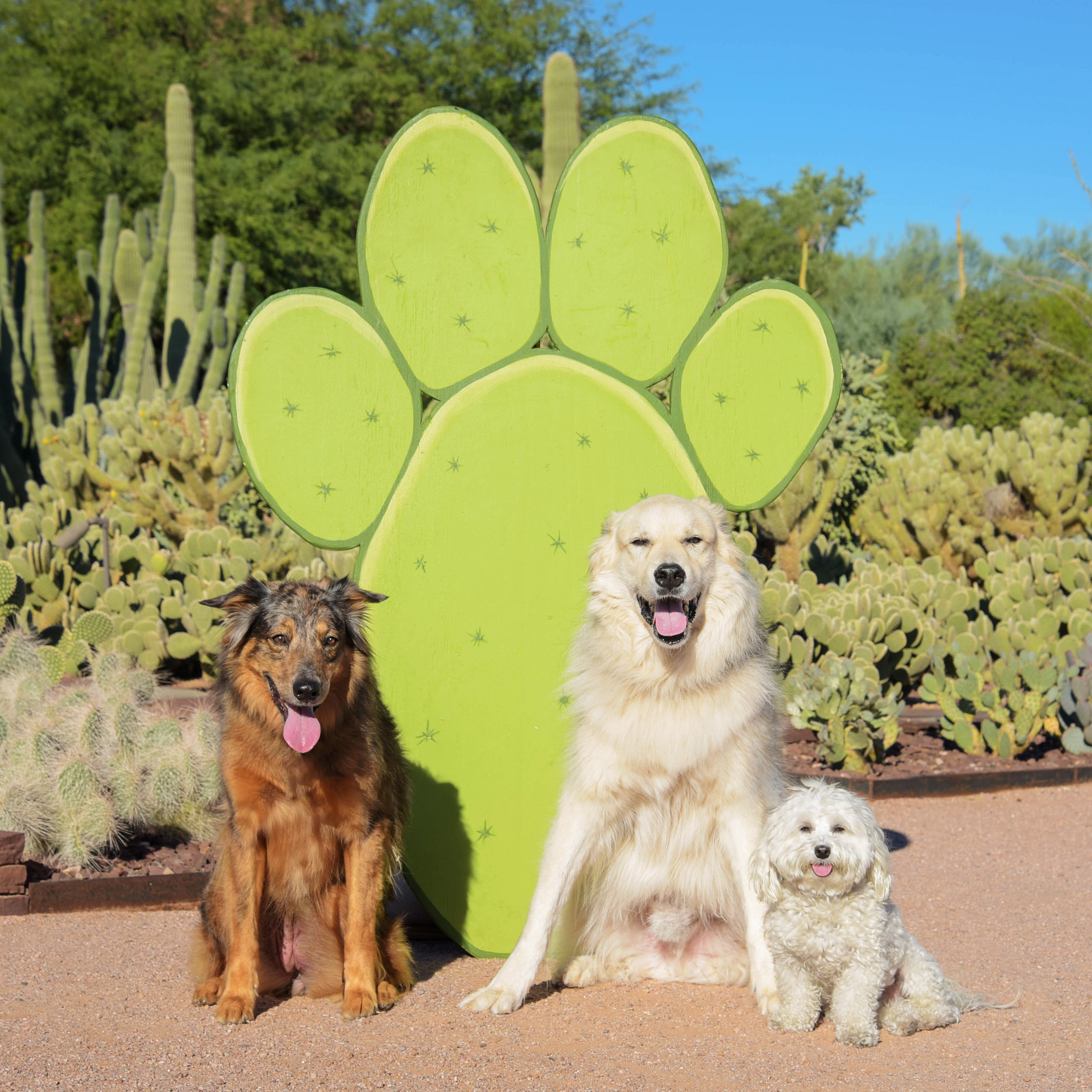 Of course, Bruiser, insisted on posing with the big dogs! He thinks he looks just like them!