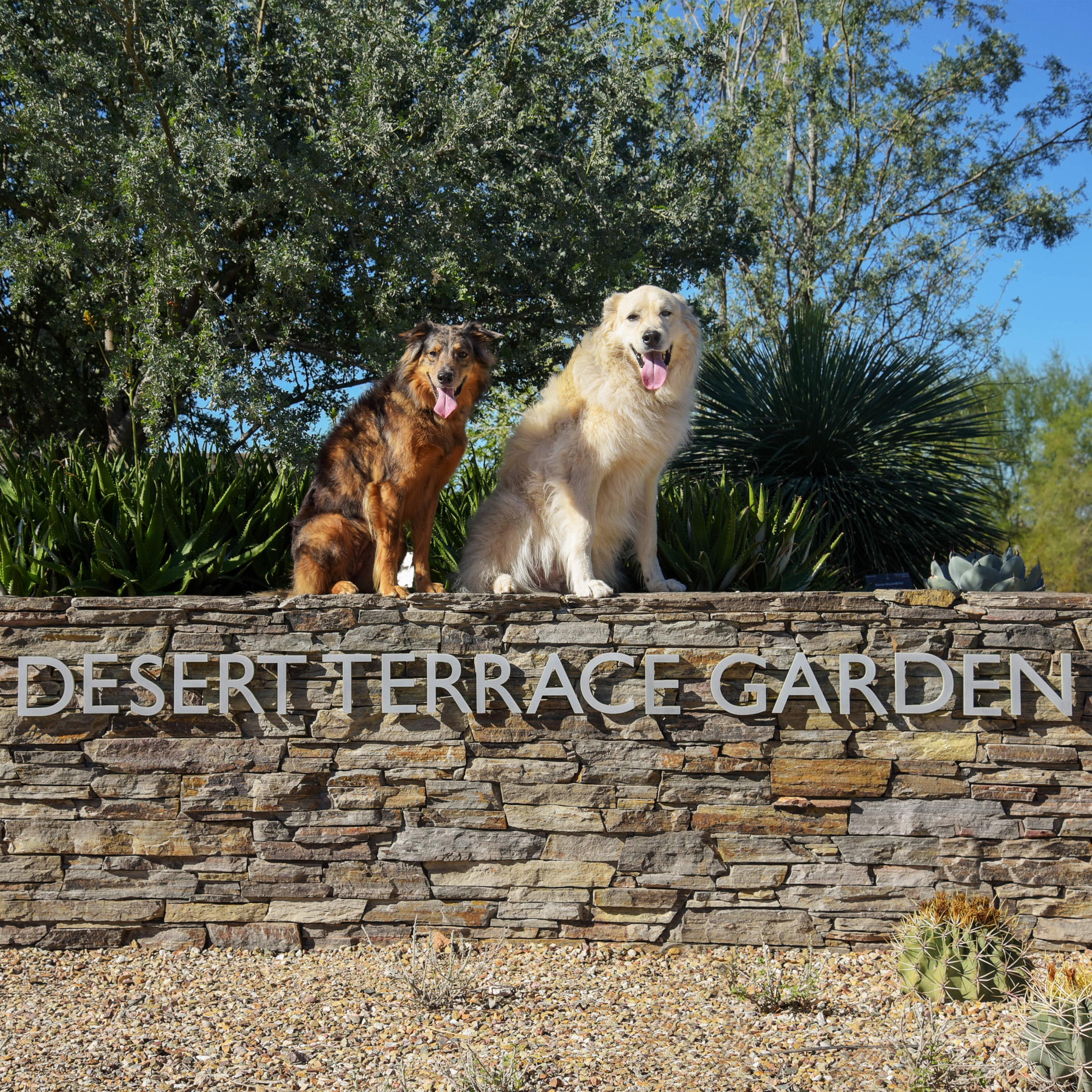 Our friends Apache & Max are just as rock star as us, when it comes to posing for the camera!