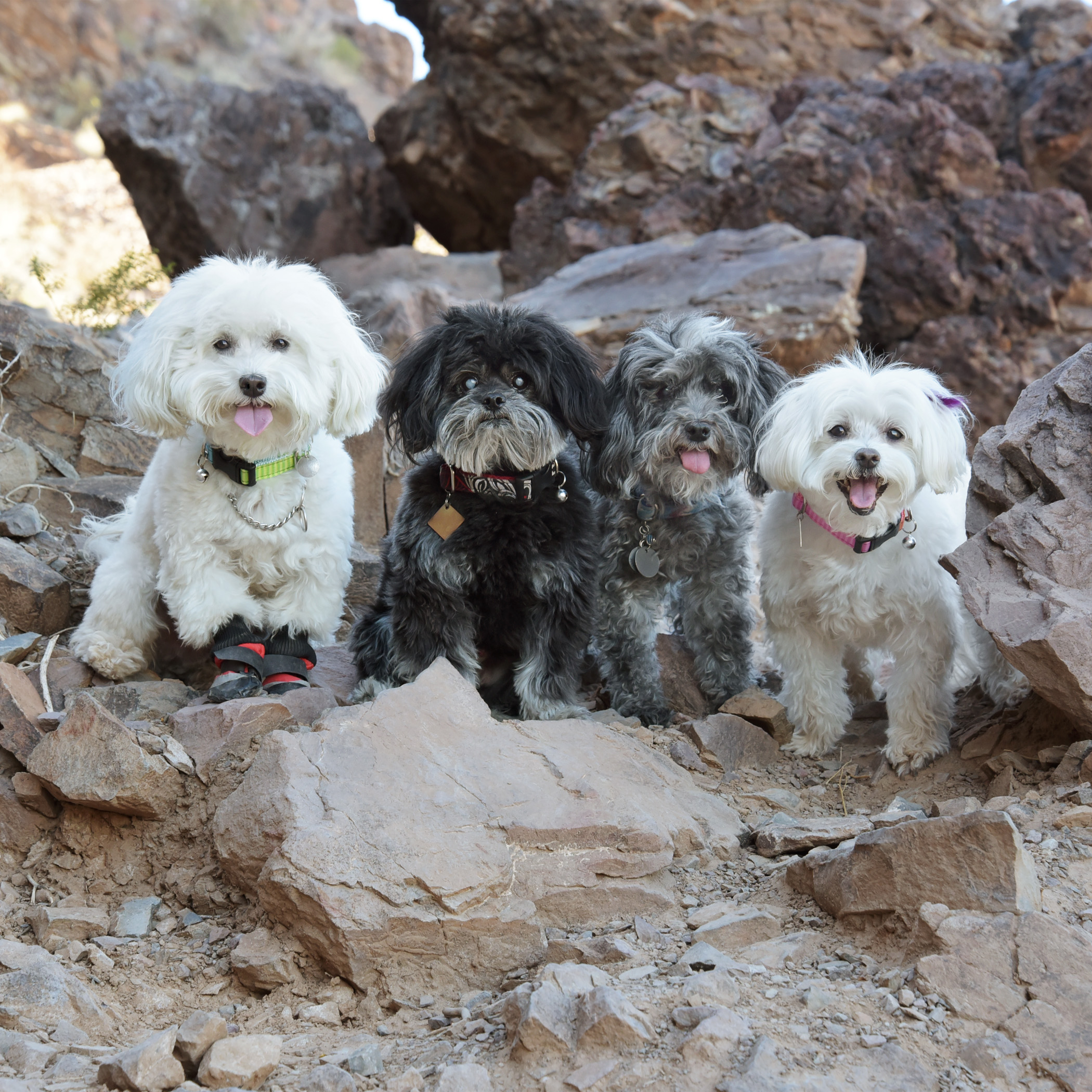 We went rock climbing today! Mommy & Daddy had to help us in a few places where the rocks were too big for our little legs. But, for the most part, we scrambled up the rocks like we were professionals!