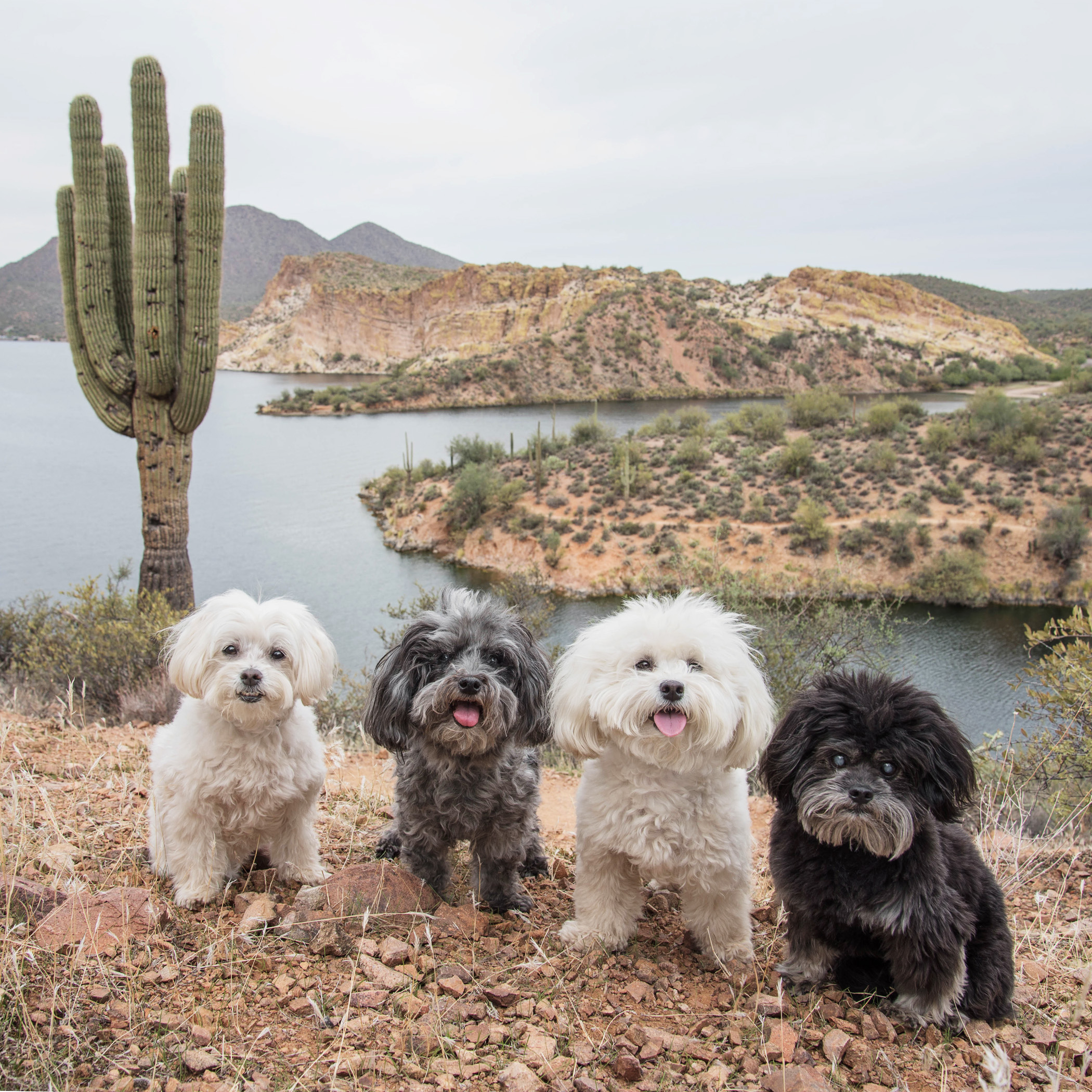 See that big cactus next to us, it's a saguaro...guess that's how they named the lake!
