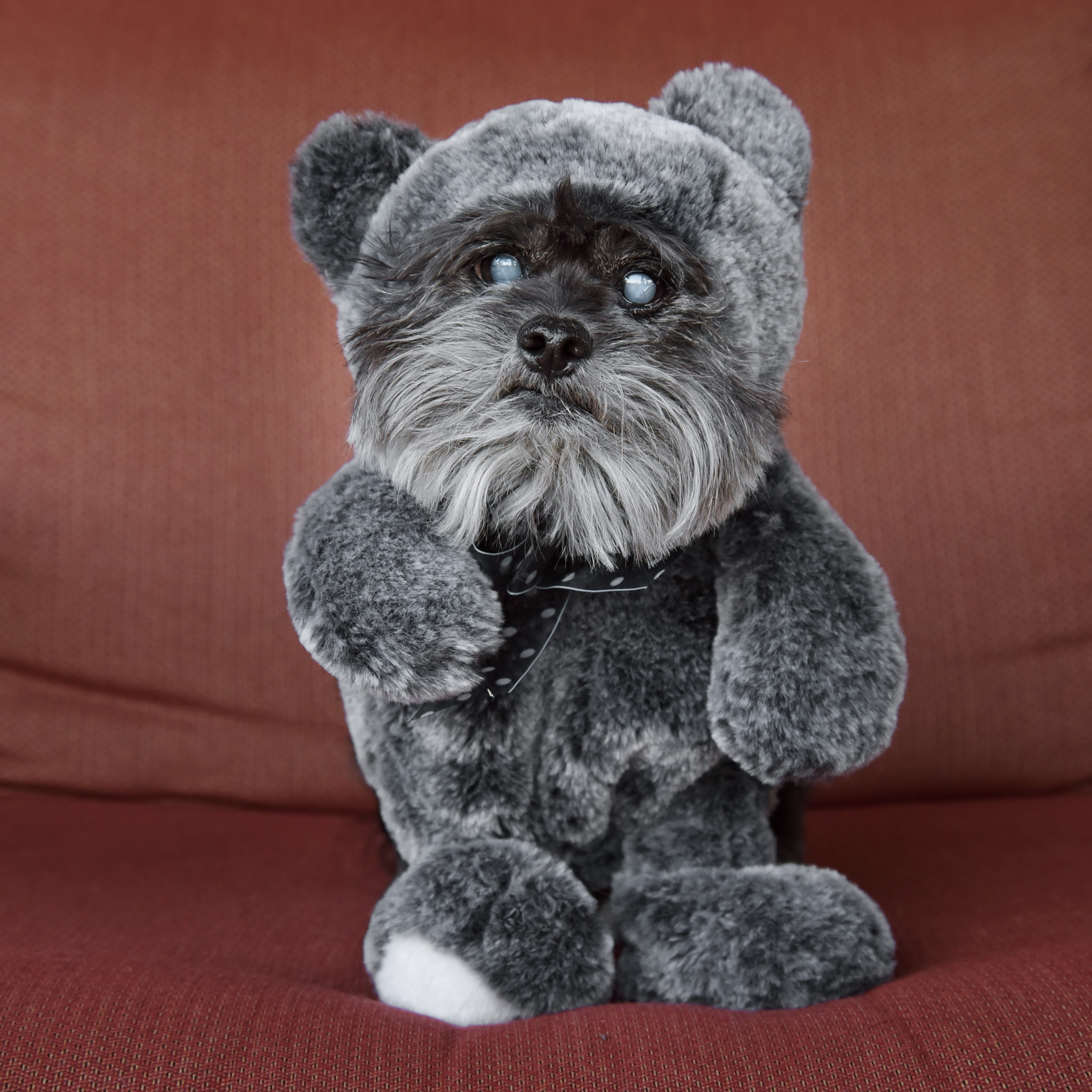 Teddy Benji! I think he was an Ewok in another life!