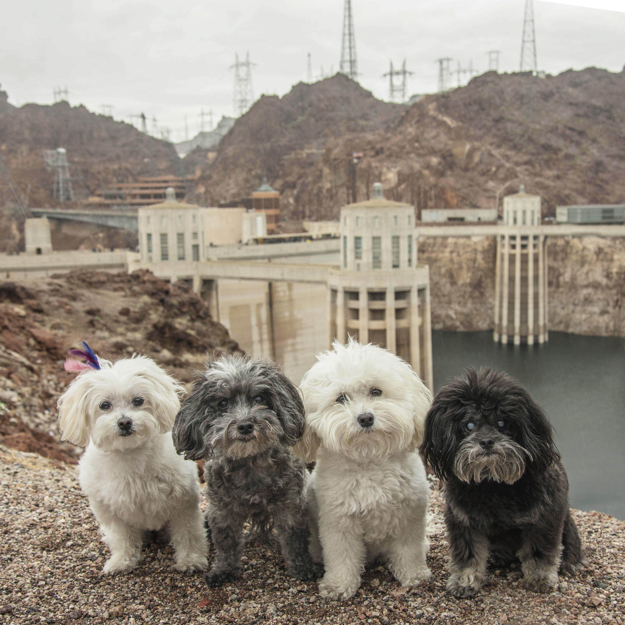 Our Daddy is a bit of a geek, so he drug us all the way to this Hoover Dam thing. We don't get it, but we do love our Daddy, so if it makes him happy, then we're in!