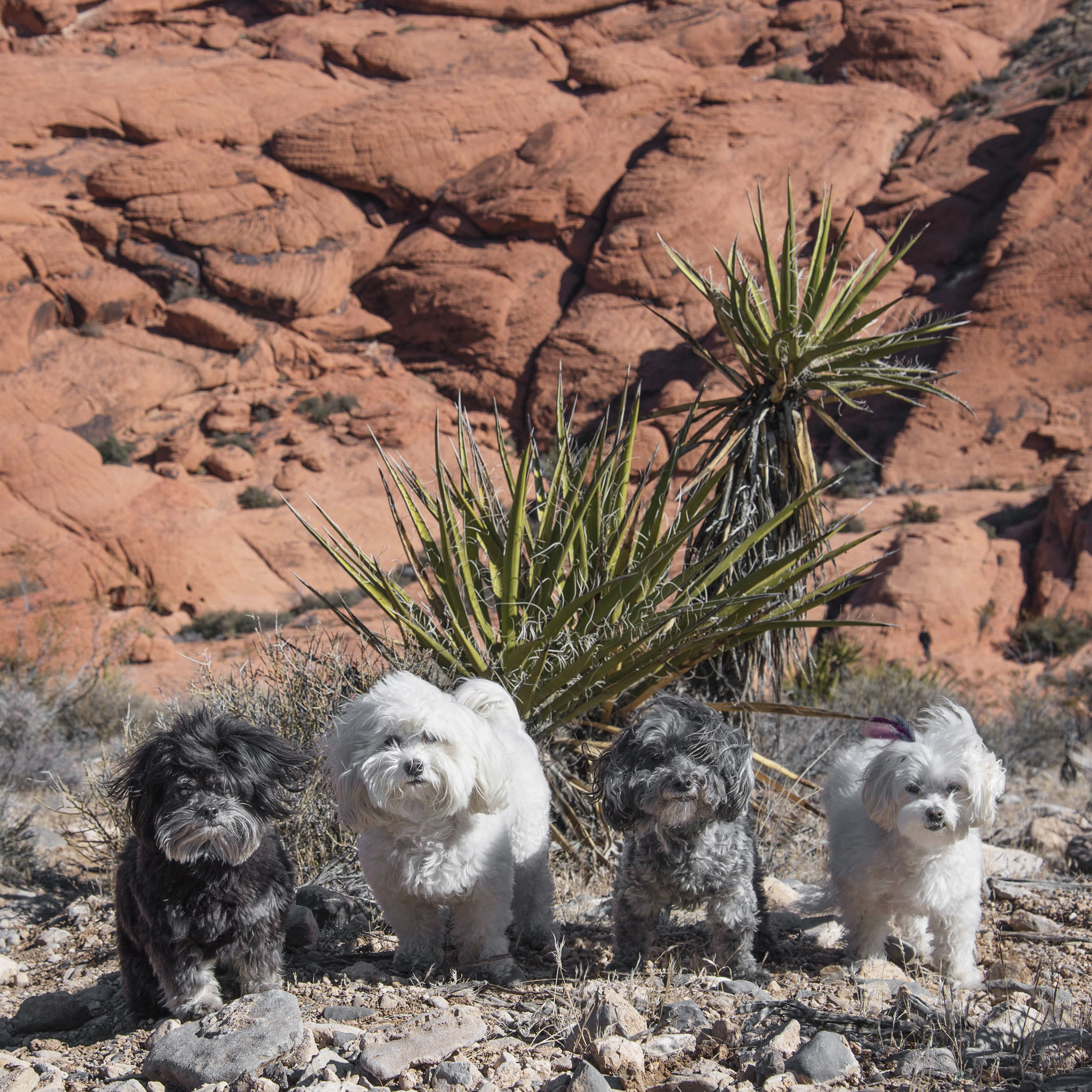 Could you have picked a windier spot, Mom? Again, so professional! If we're not careful we're going to blow off the side of this mountain at Red Rock Canyon!