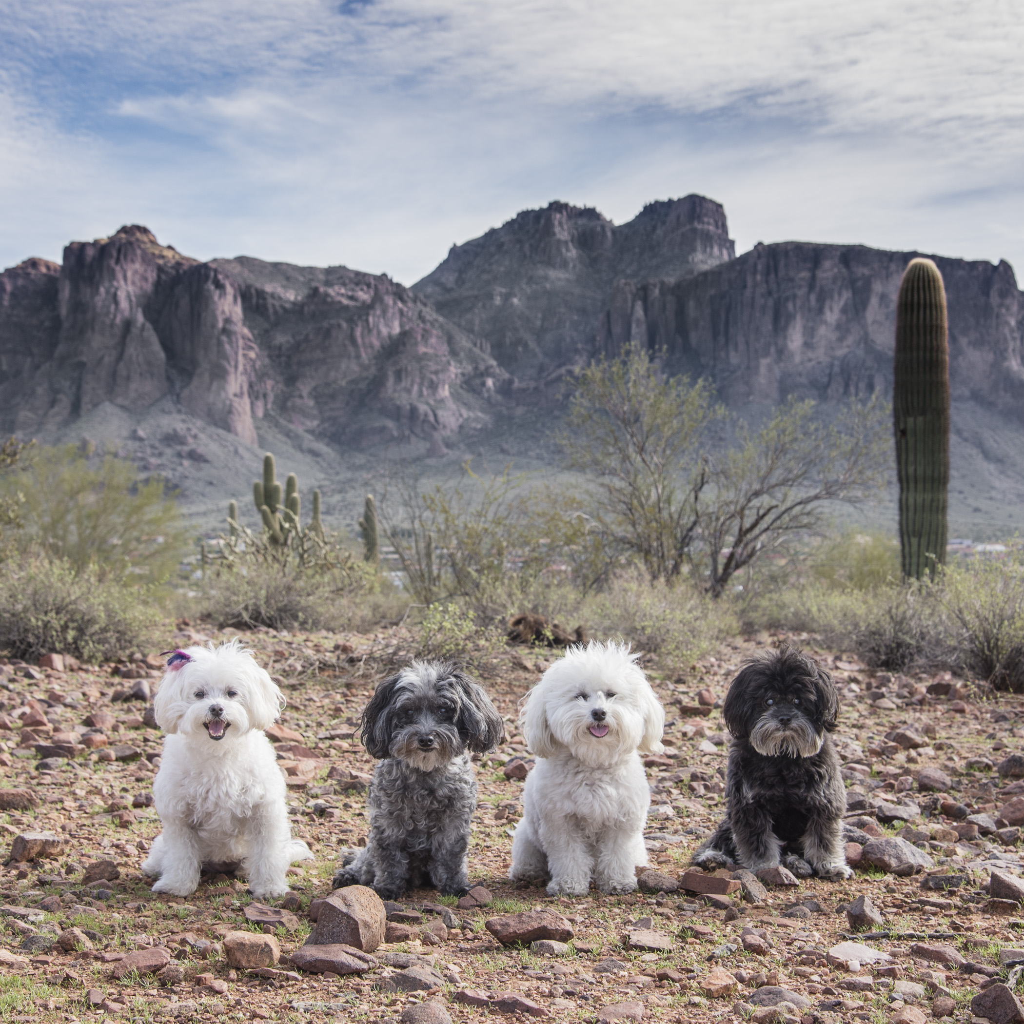 On the east side of Phoenix is a mountain range called the Superstition Mountains. They stand very tall, with a unique shape to them. We've never been to that side of town, so we decided to do a one day adventure.