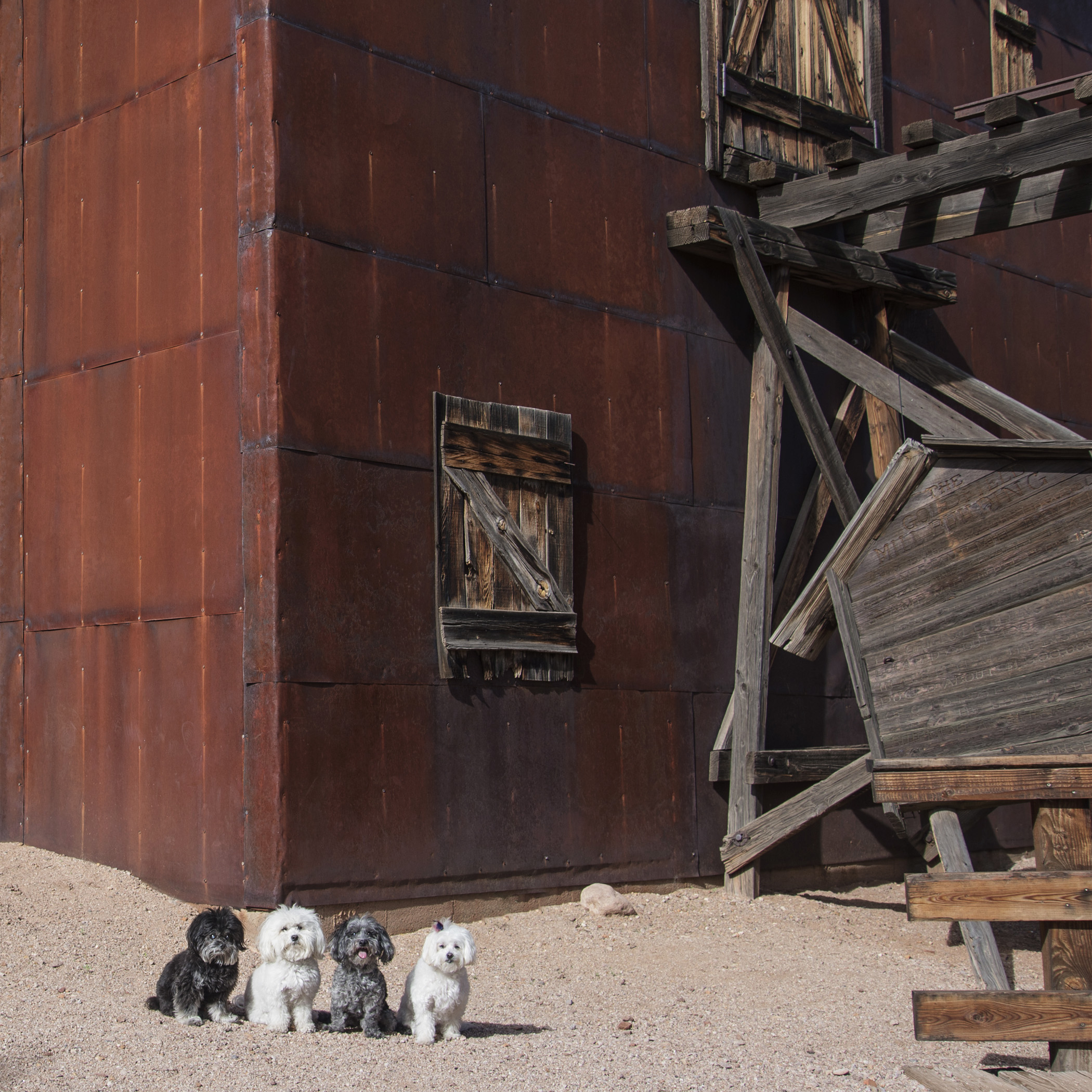 After the museum, we headed to Goldfield Ghost Town. Although Mommy & Daddy said it was safe to go in, we weren't so sure! Looks pretty abandoned and creepy to us!