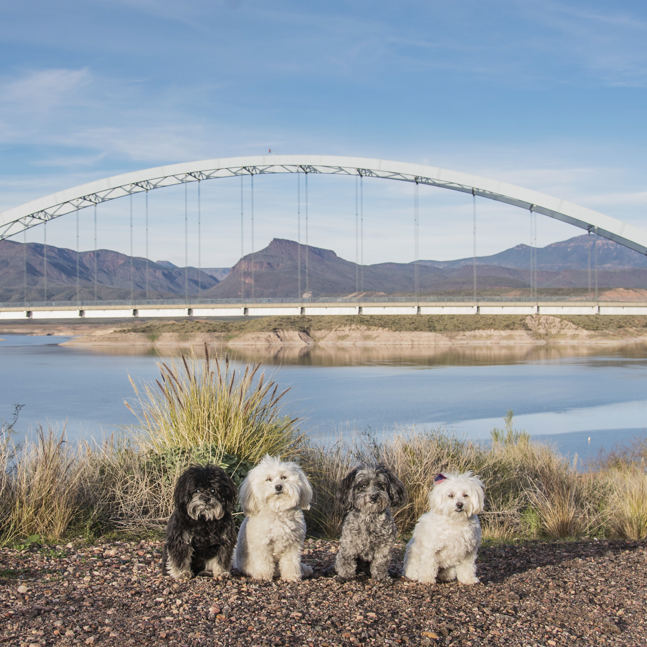 After leaving the ghost town, we drove a long way around the Superstition Mountains to get to Lake Roosevelt. It's similar to the Hoover Dam that we saw last month, but a lot smaller! Although, it's bridge was better looking!