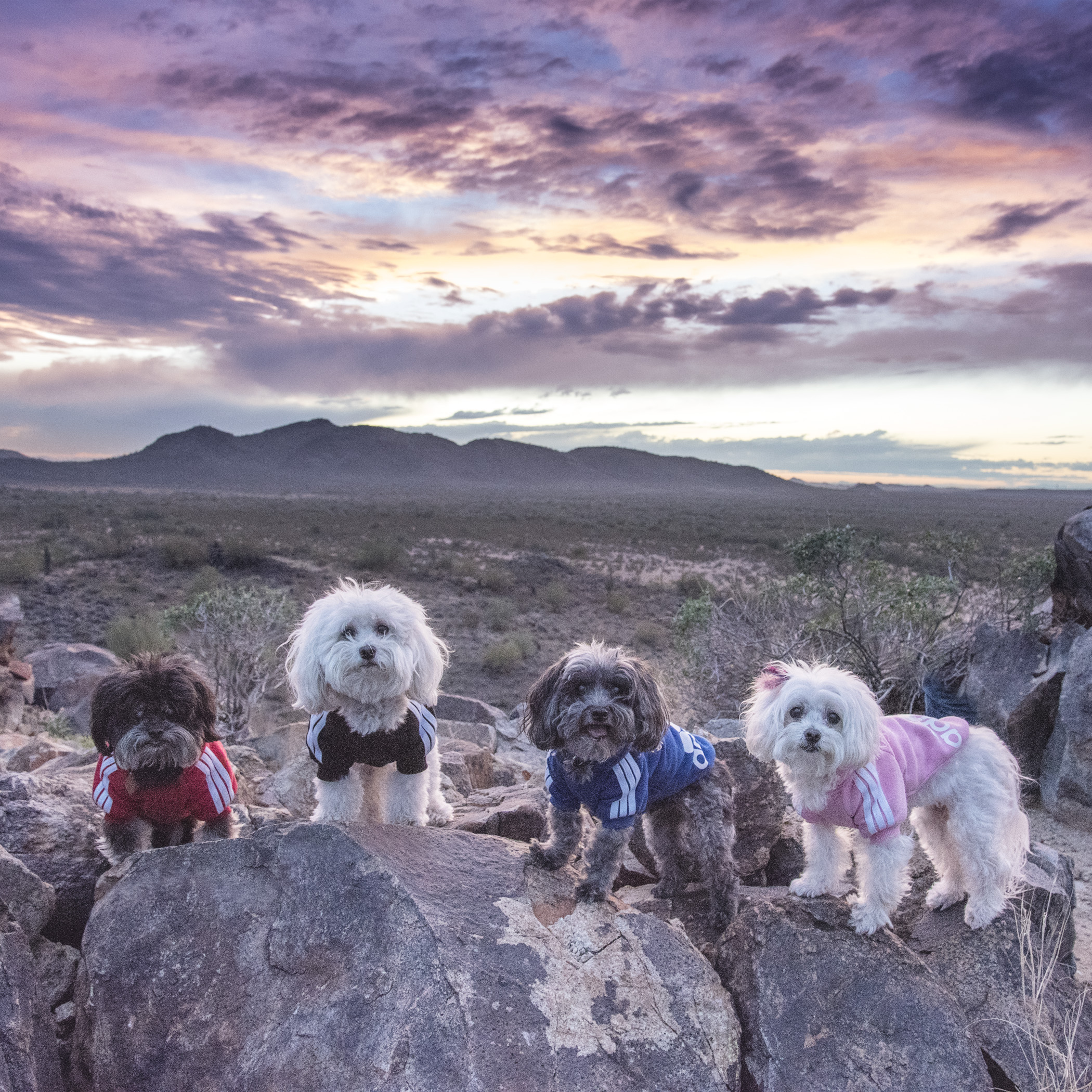 Of course, the first thing we did when they got to town was to take them to watch one of our beautiful Arizona sunsets!