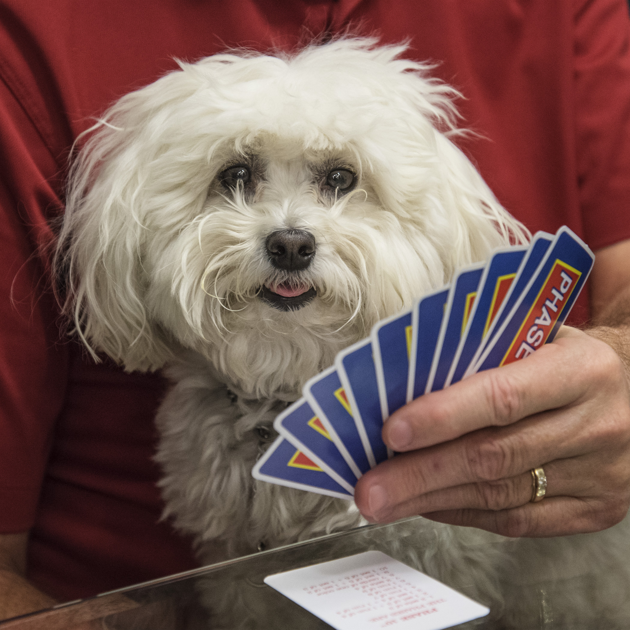 Okay, Grandpa, I'm really good at cards. Follow my lead and there's no way you can lose.