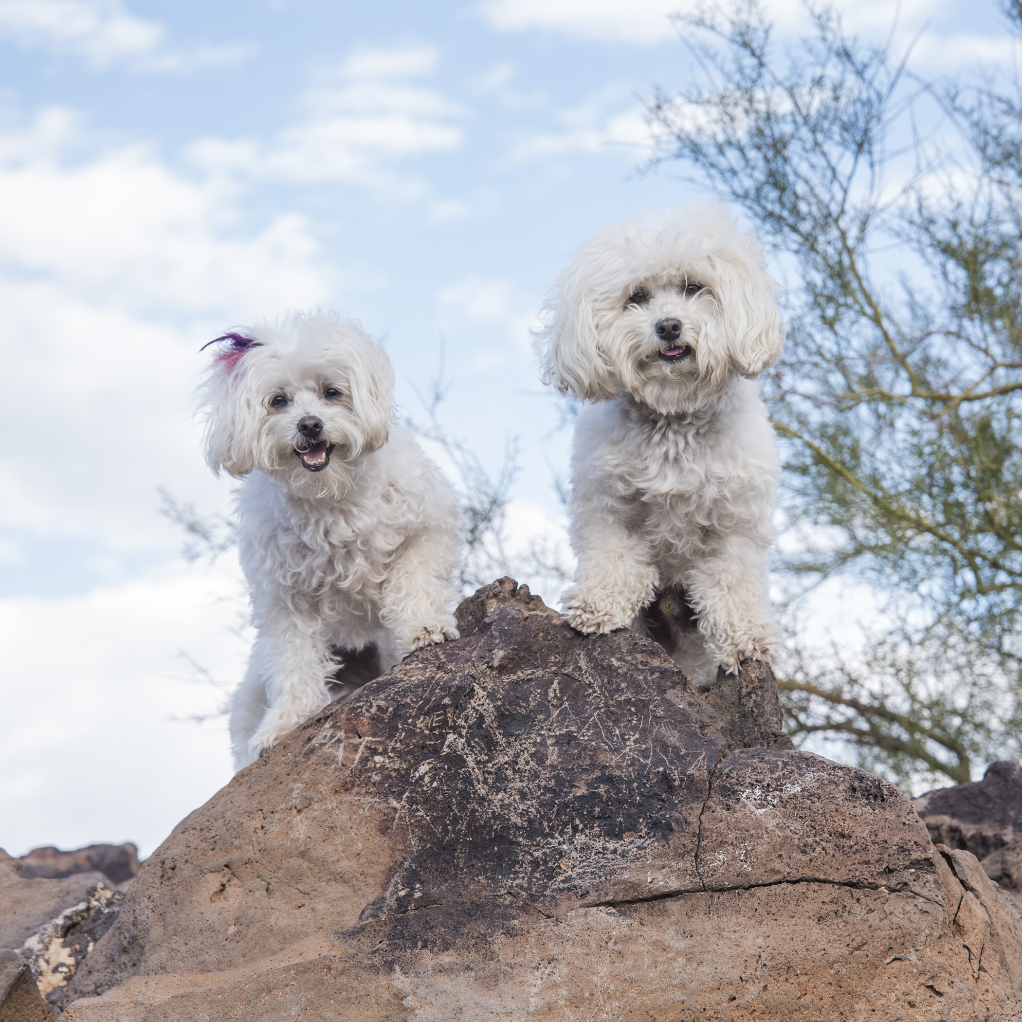 Queen & King of the Mountain!! That's right we climbed all the way to the top on our tiny little legs! You're jealous, we know!