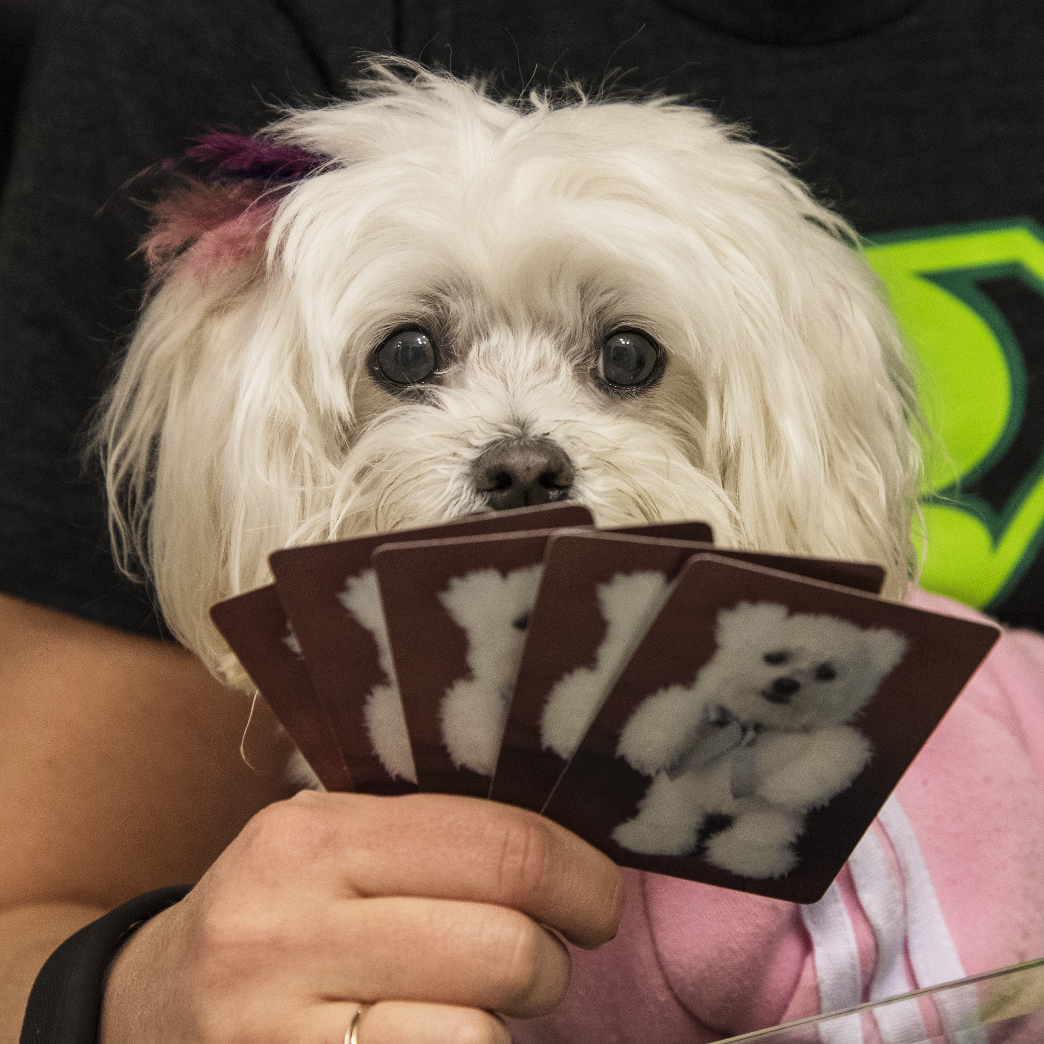 Pebbles was very happy to return home, where the music volume was more controlled and she could share her card shark skills with her Aunt Lori.