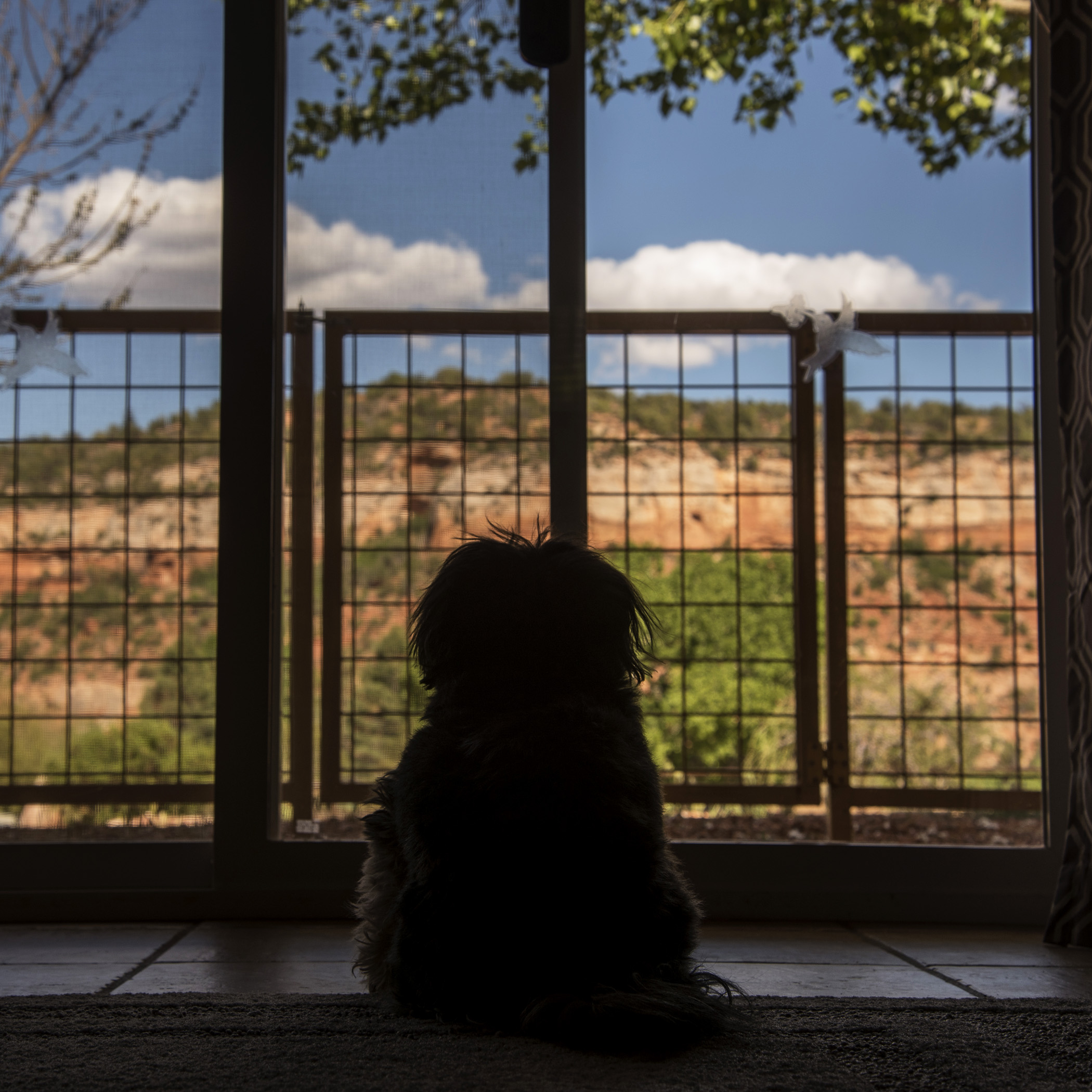 Yep, this will be a perfect place for me to spend my day. (Mommy Note: I don't know how he does it, but within 5 minutes of arriving and getting settled, this was the spot he choose. It's as if he could just sense this was the perfect view…and no the door wasn't open, so no breeze was coming in.)