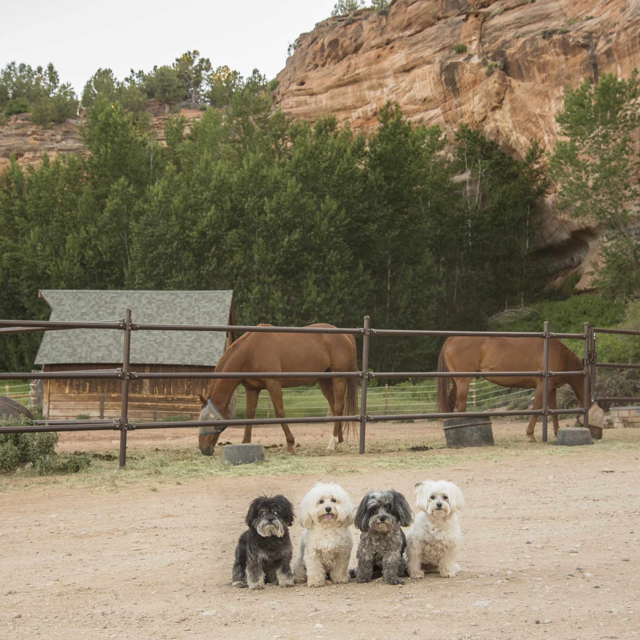 We saved the biggest for last…the horses, of course! Their poop is bigger than us! Any volunteers for that job?? At Horse Haven you can work with horses, goats and even sheep. If you're a farm animal lover, this is the area for you! And, of course, many of these beautiful creatures are available for adoption…to the right home, of course!
