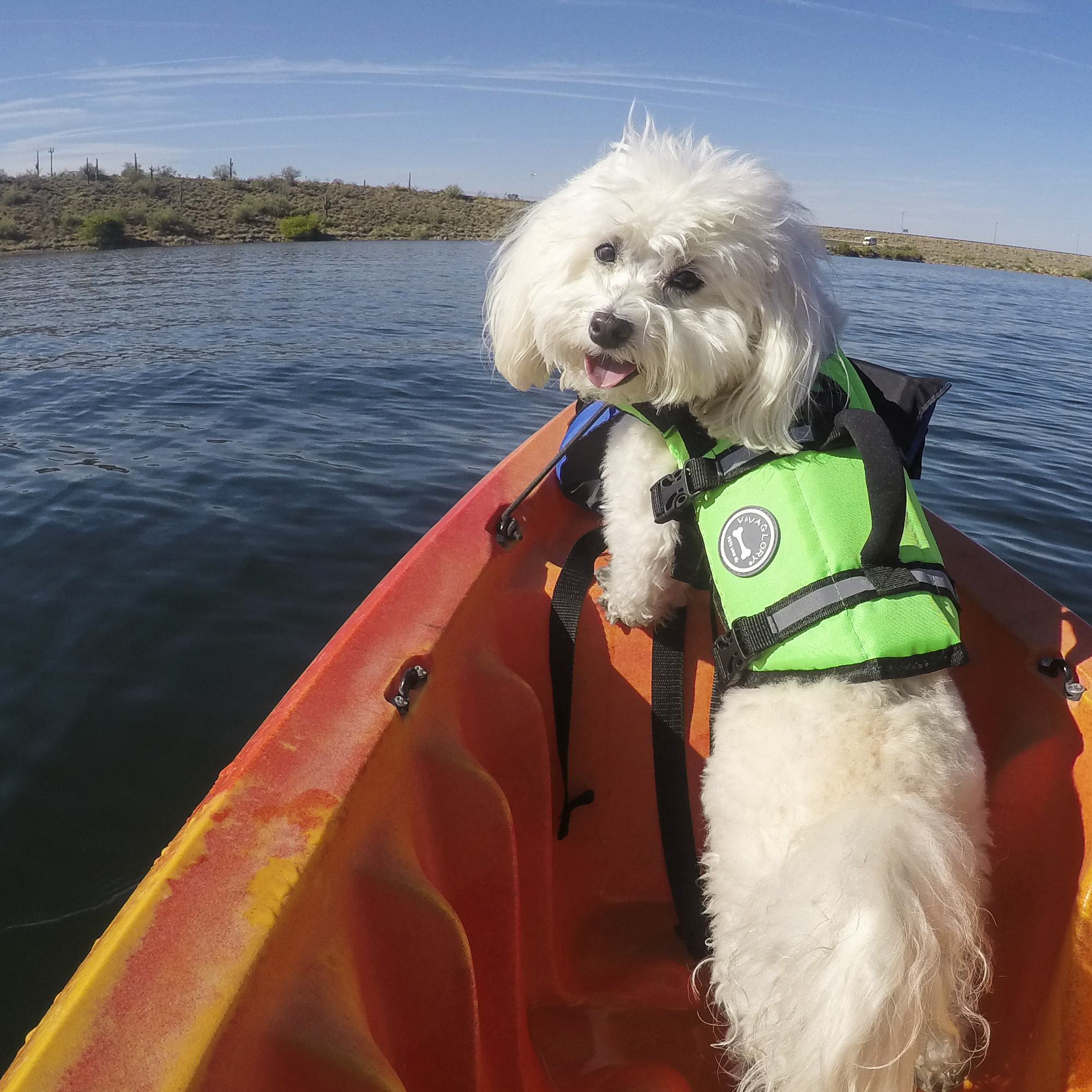 Trust me, I know which way to go. I was born to be on the water!