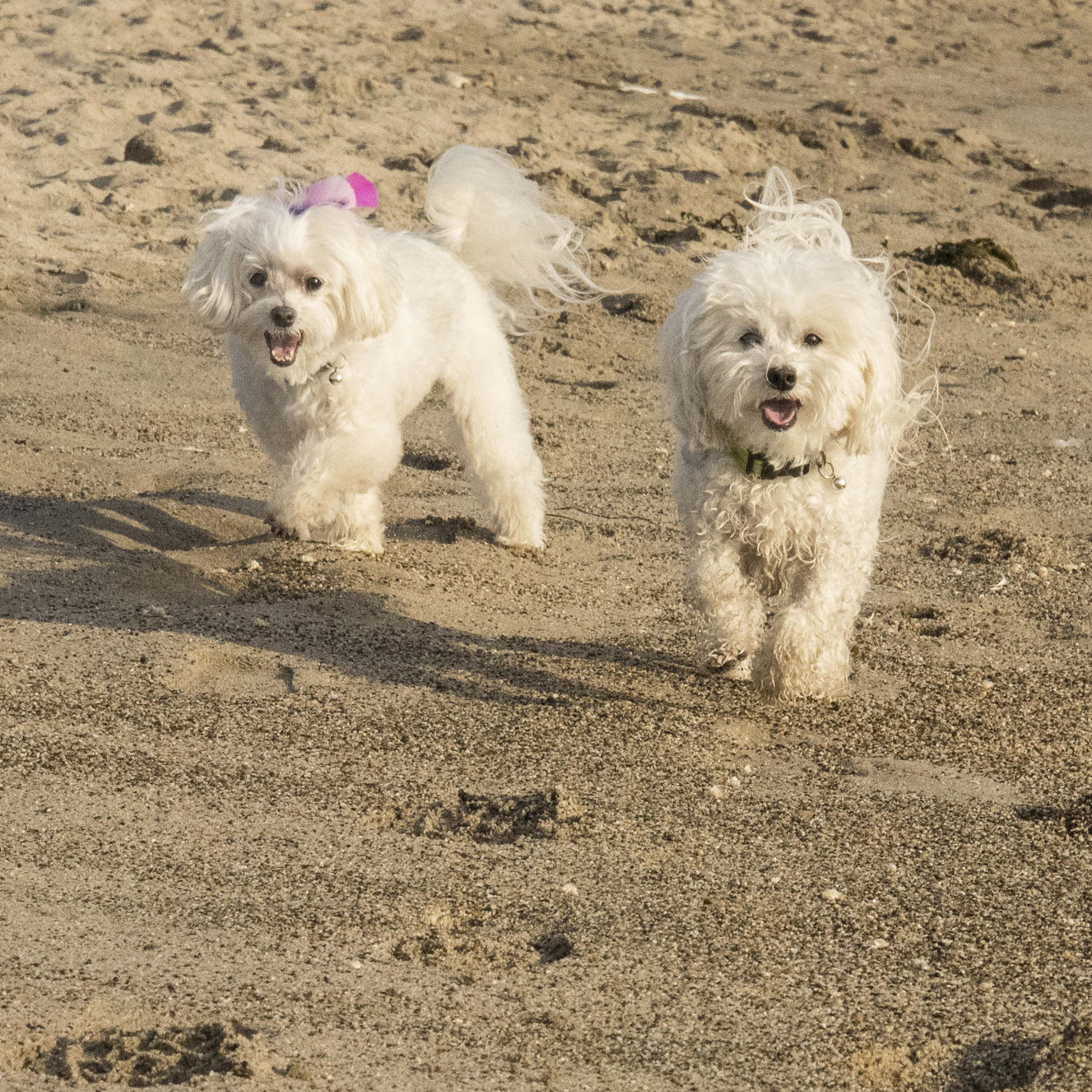 Pebbles may not want to be down by the water, but that doesn't mean she won't have fun on the beach with her brother!
