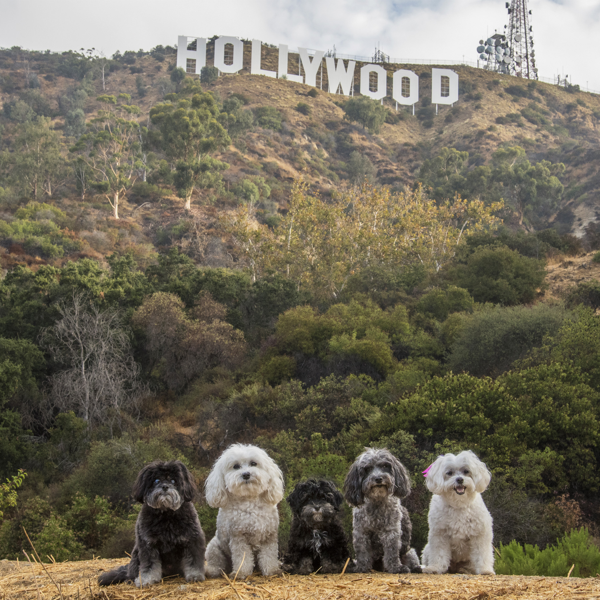 Hollywood, we have arrived!! If anyone knows of any walk-on extras needed, we're ready and available!