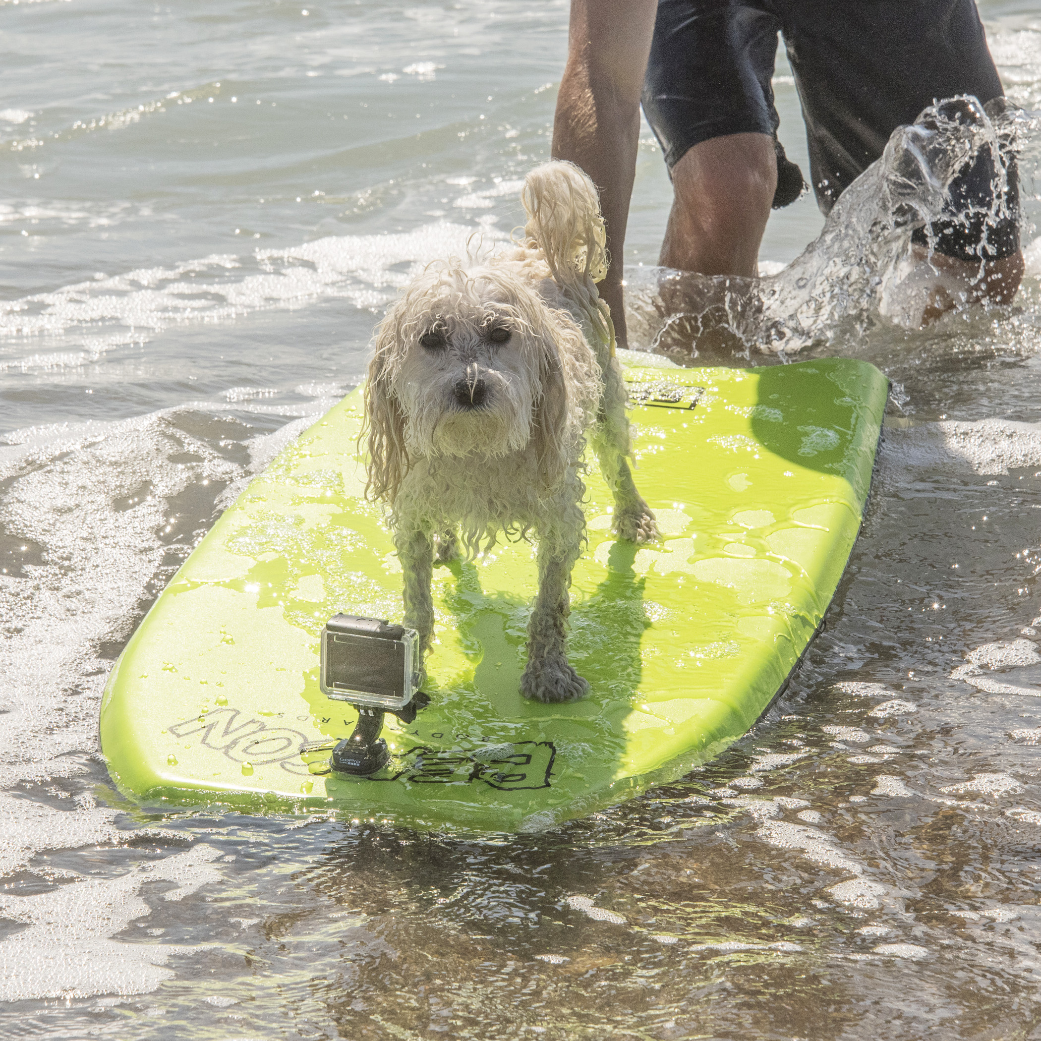 I attempted to learn how to boogie board today!  Let's just say the surf was a bit intense and overpowering for my little guy muscles! But, I gave it the Super B try, and even stayed on for a few quick rides.