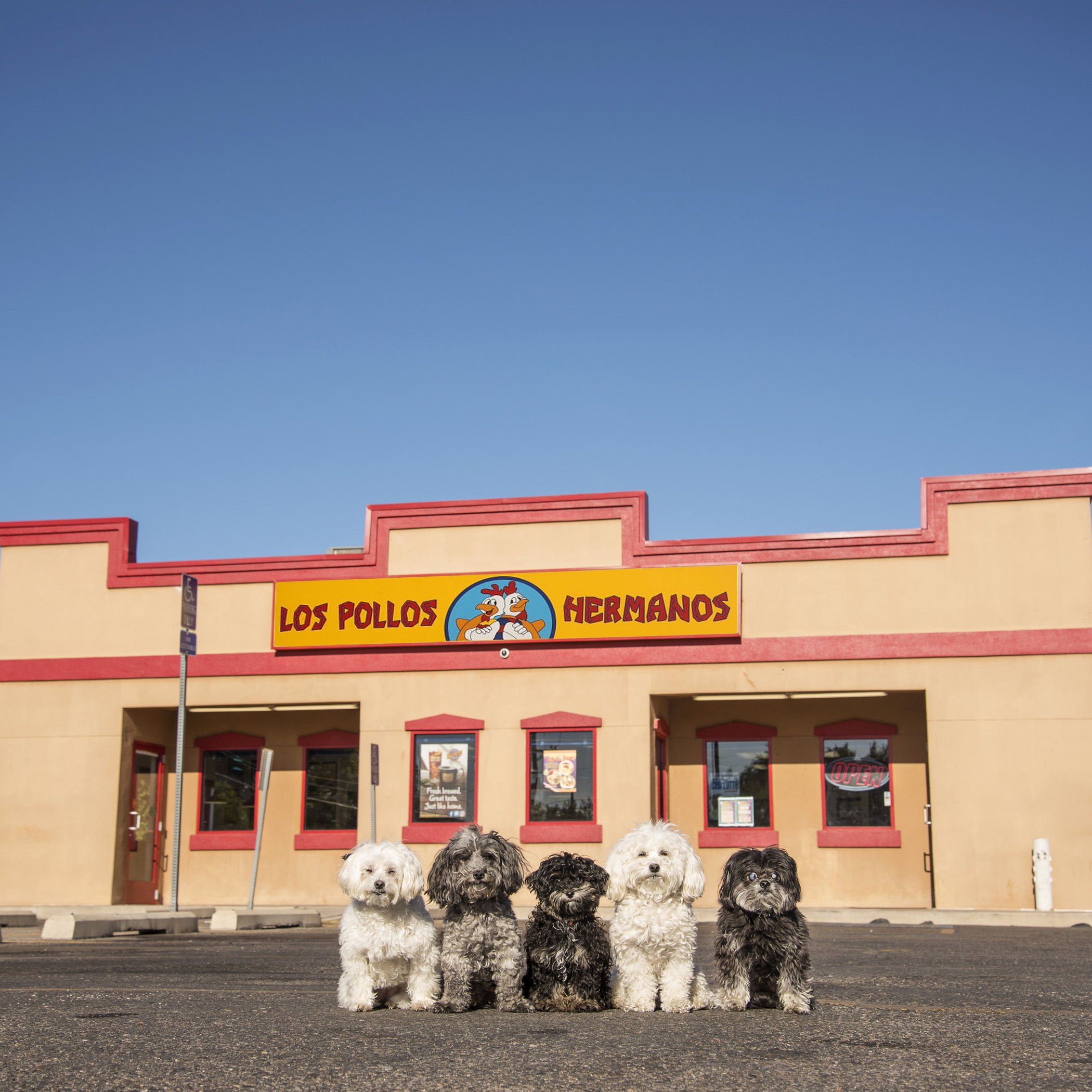 Los Pollos Hermanos. You should have seen Benji's nose going when he smelled the fried chicken!