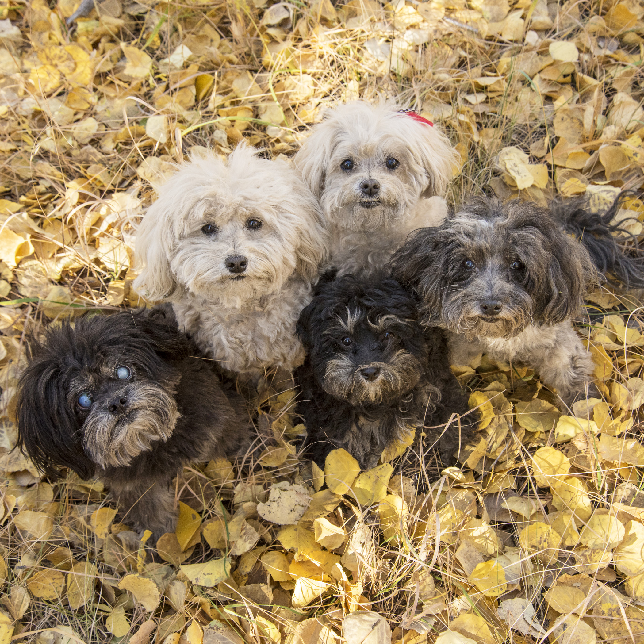 Tell us again…why are you making us pose in a pile of leaves? All we really want to do is run and jump…and chase the blowing leaves!