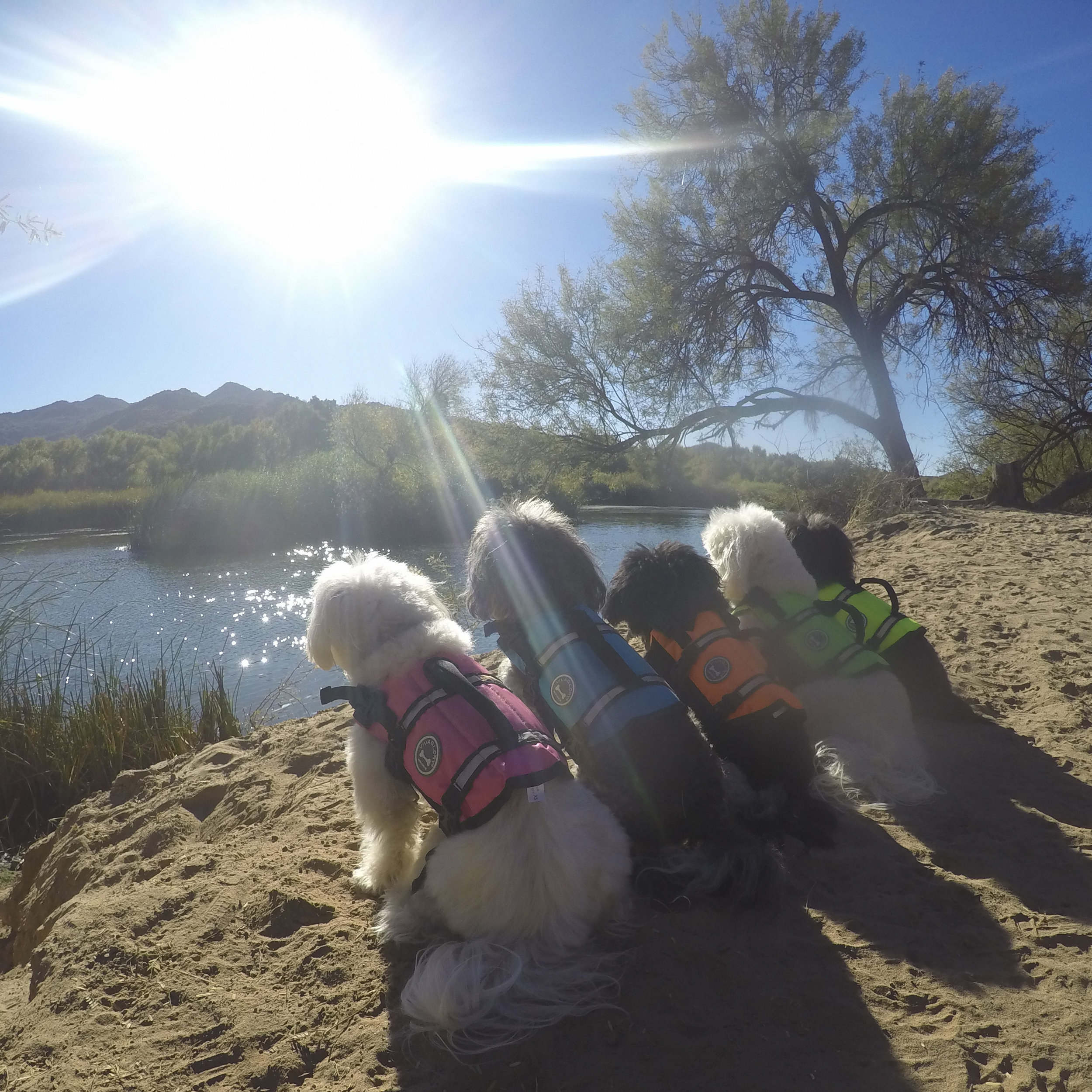 Another #OptOutside day for the Thanksgiving Weekend! This time, we rented a kayak and traveled the Salt River.
