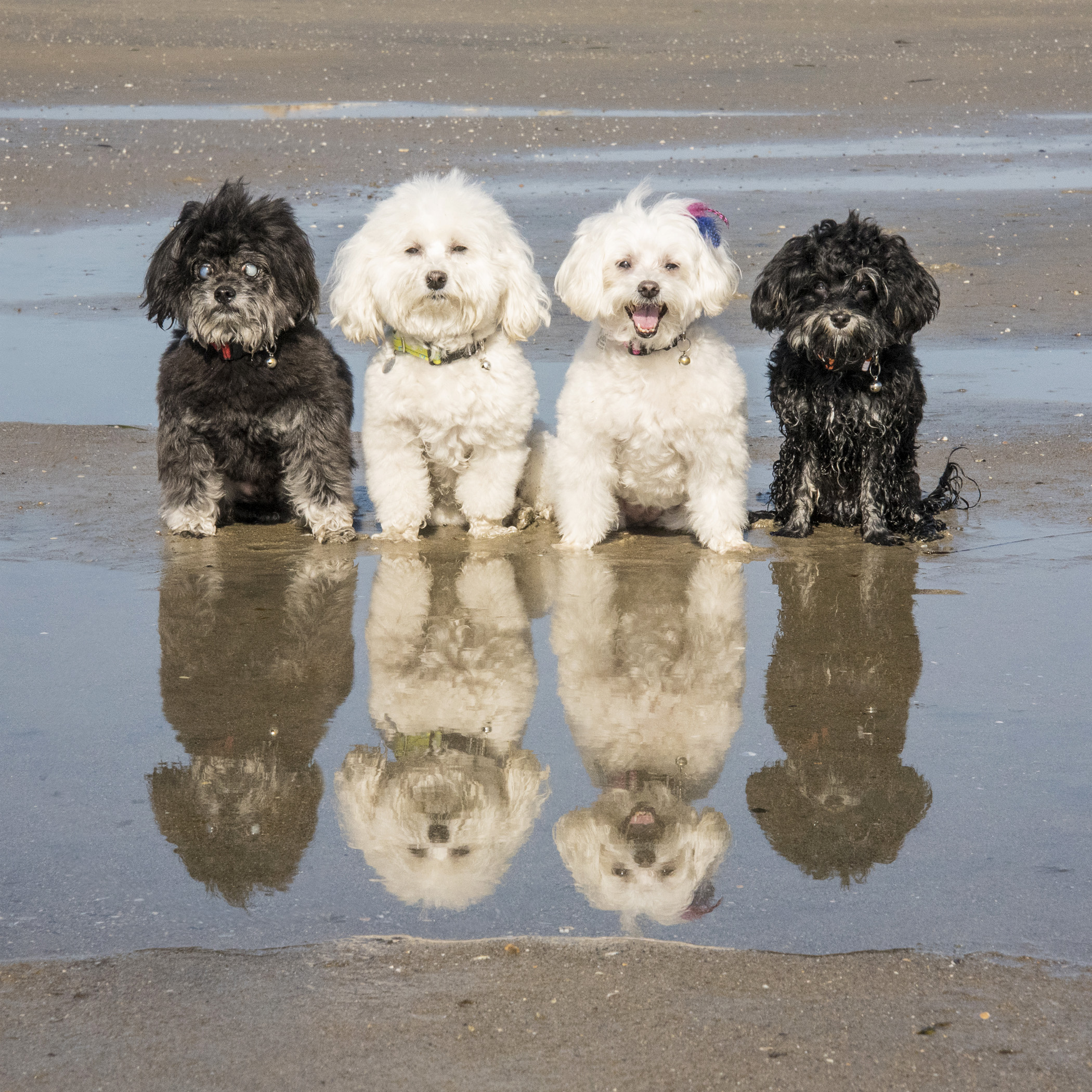 It's pretty obvious who's all about the posing and who just wants to be off playing! Oh, Pebbles!