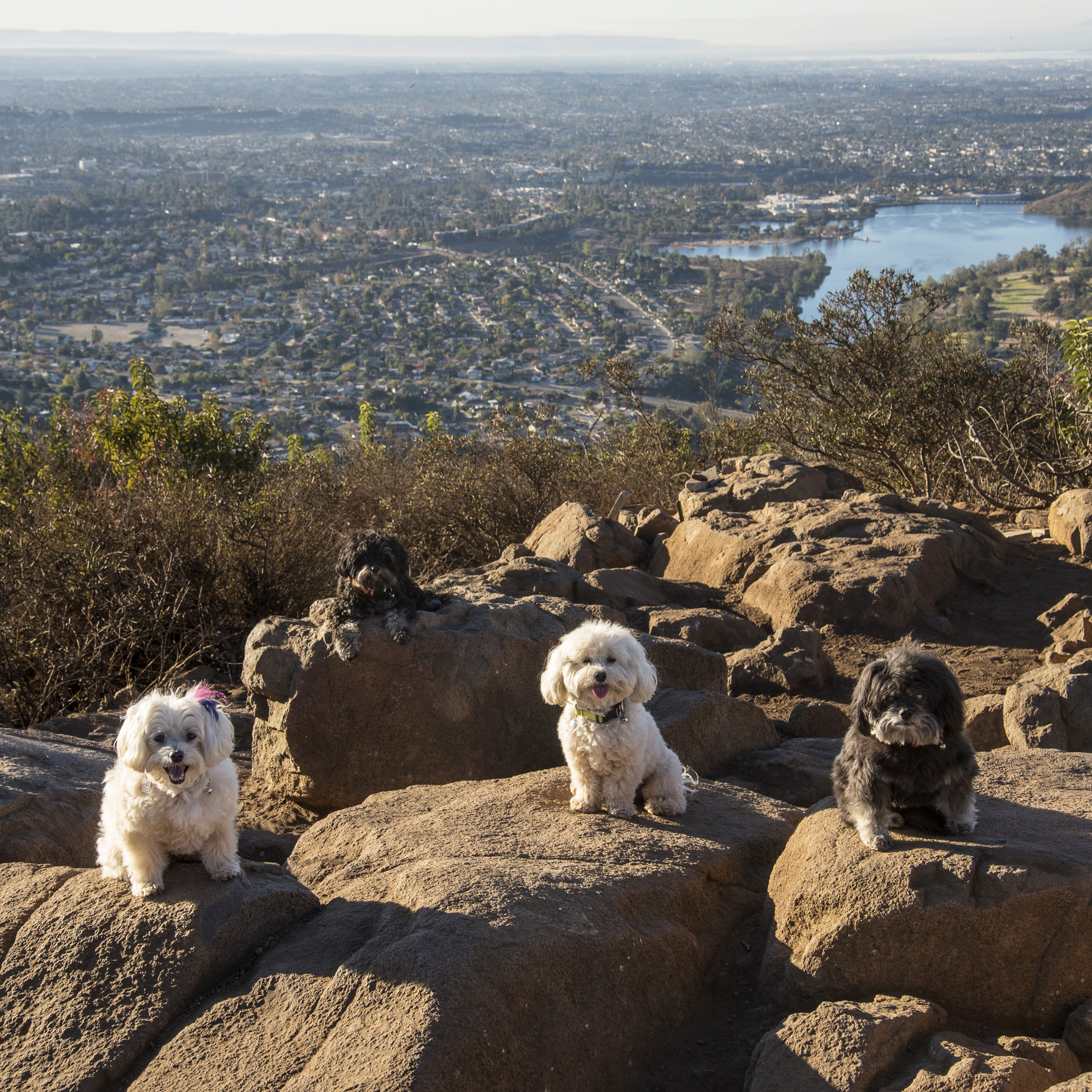 No adventure would ever be complete without a mountain hike! Whew, it was a steep one, but we made it to the top of Cowles Mountain. Everyone we passed was so impressed by our athletic toughness!