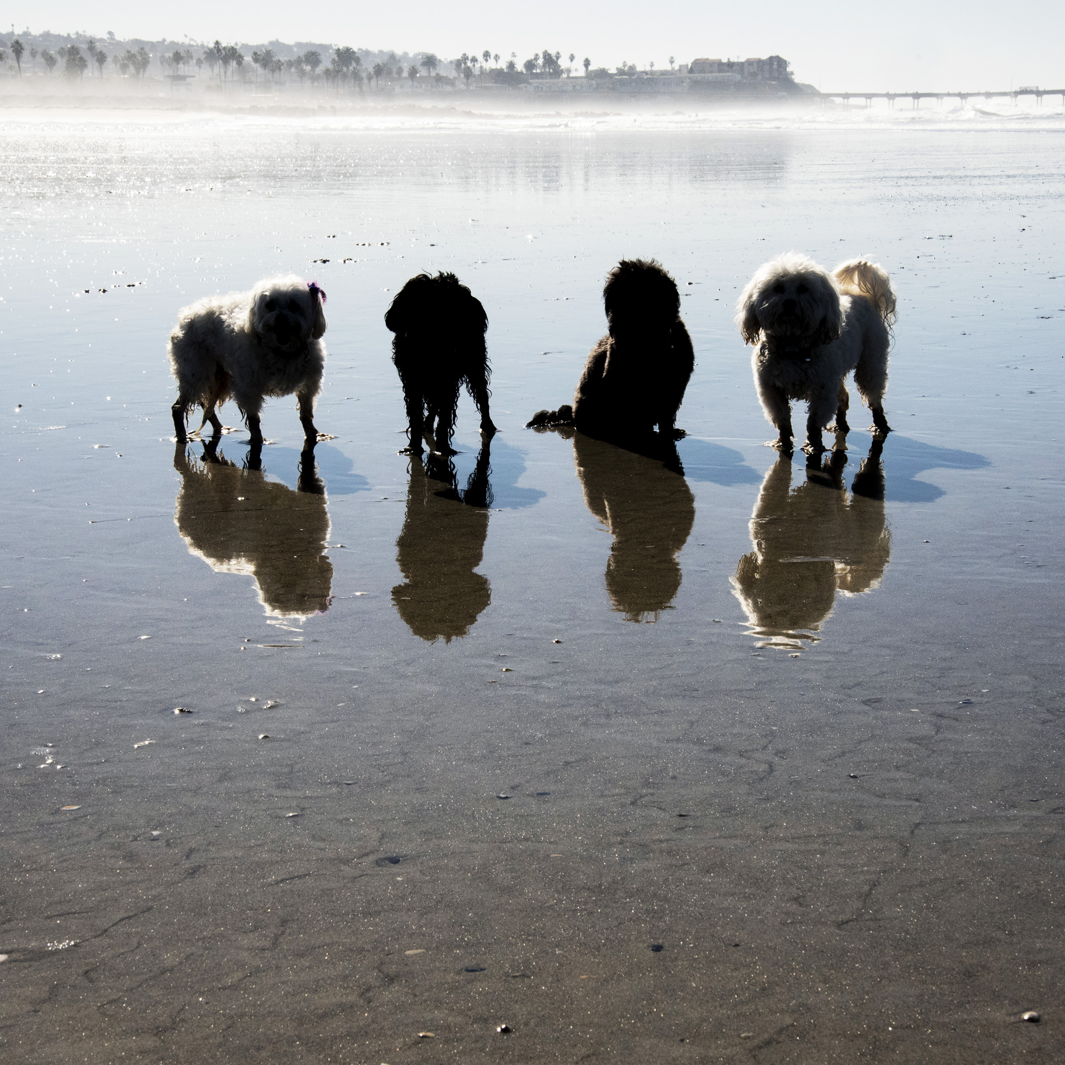It's really too bad the ocean and the desert can't be right next to each other. We'll miss you Ocean Beach Dog Beach!