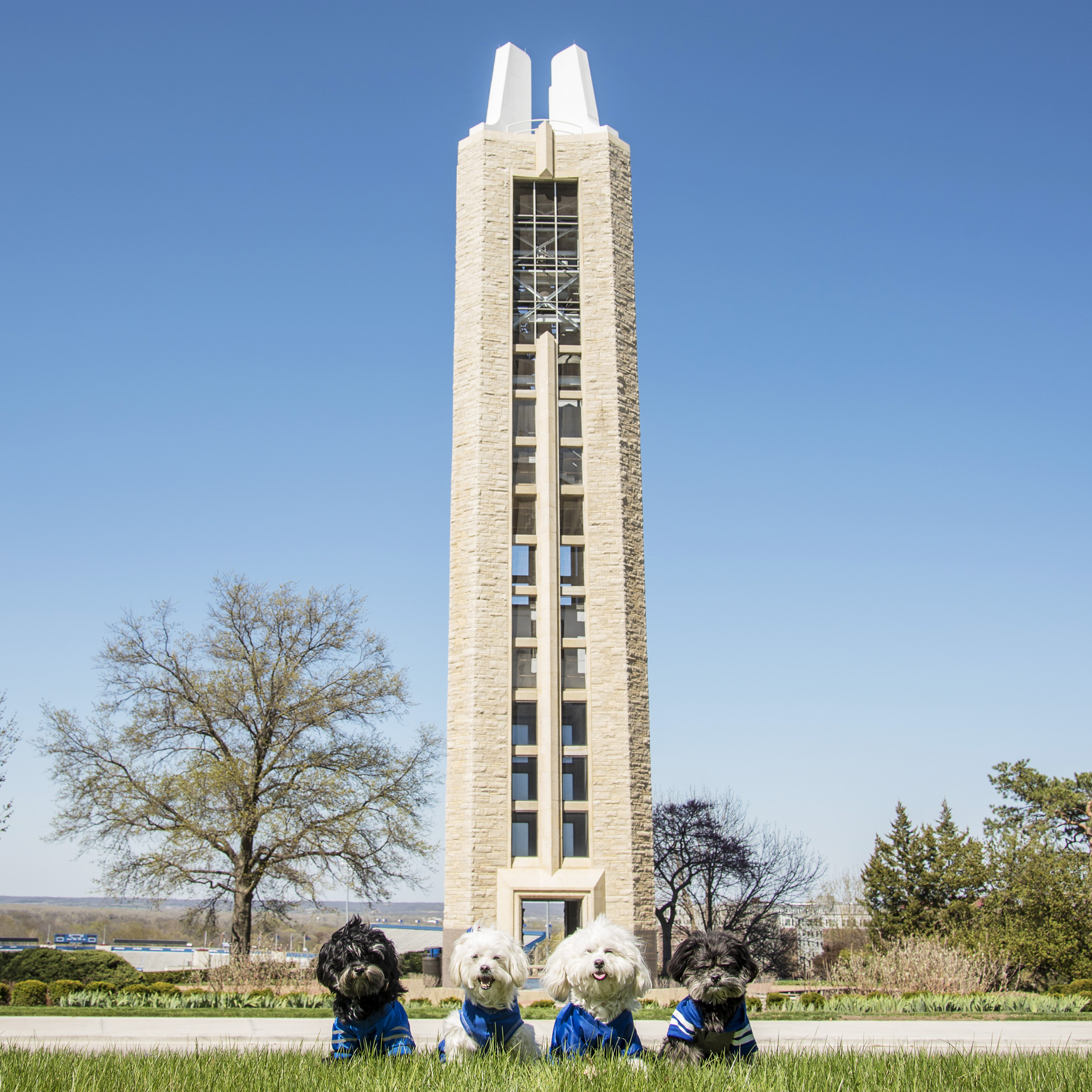 Do you think we'll graduate someday and walk through the Campanile?