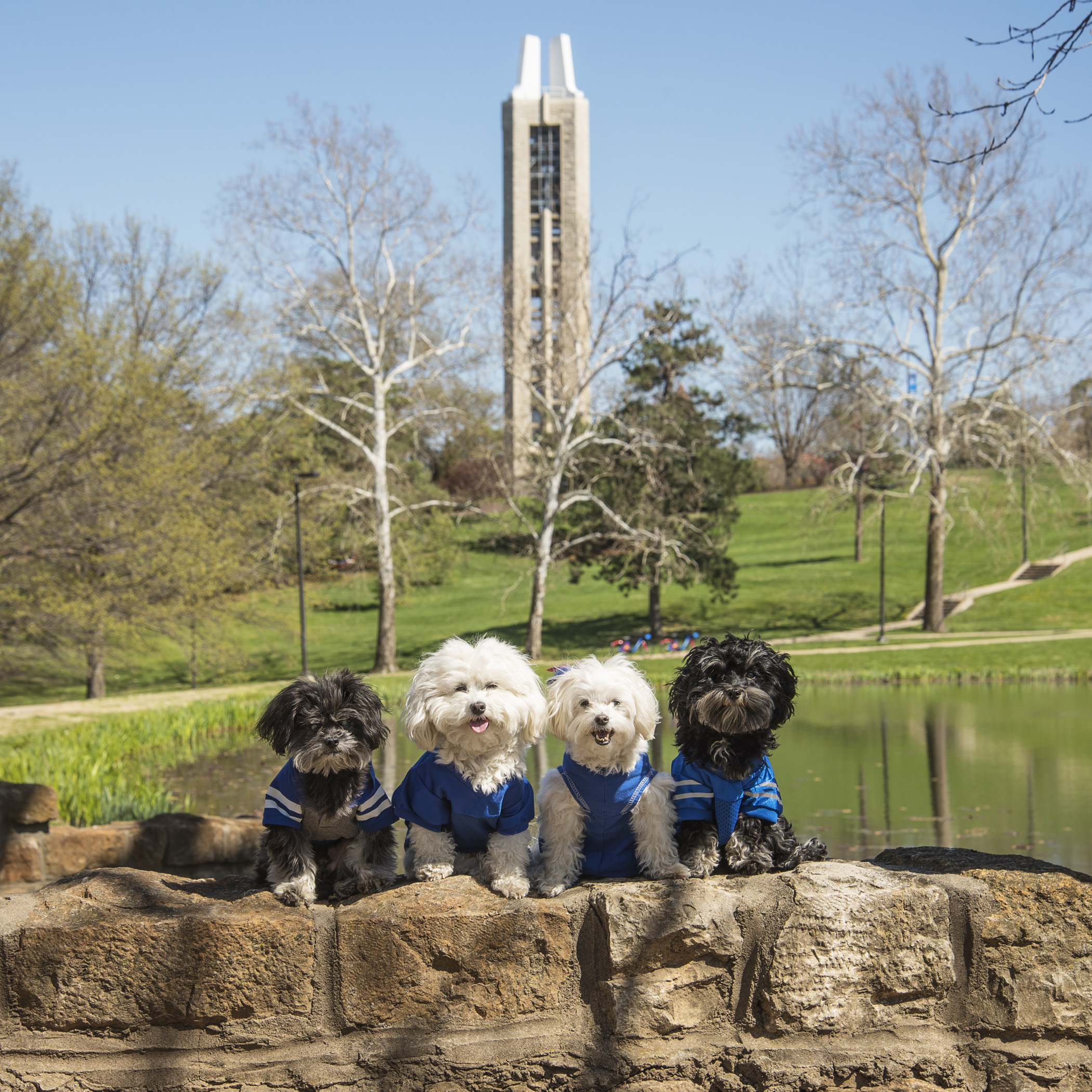 The iconic Campanile sits next to Potter Lake. Mommy & Daddy walked through the Campanile as part of their graduation ceremony. There's a legend that if you walk through the Campanile before commencement day you won't graduate!