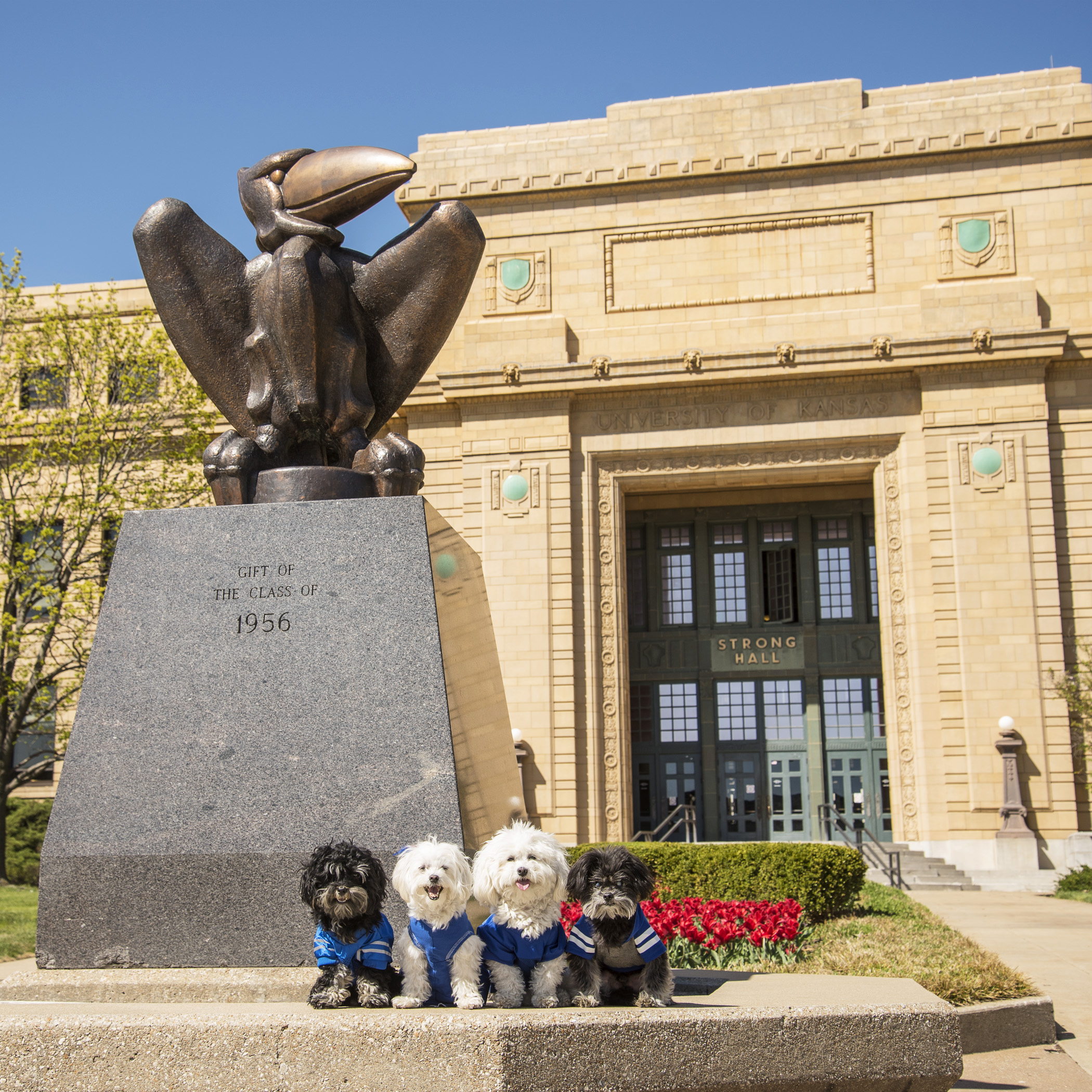 It seemed appropriate for us to pose next to Strong Hall! We're the strongest little fluffies we know…and we're a lot cuter than that old version of the Jayhawk!