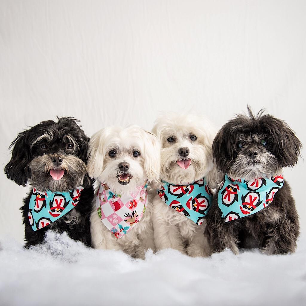 Danish Dog Fashion