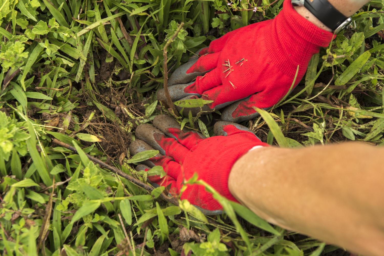 Volunteer_Reforestation_Boise Photographer-4.jpg