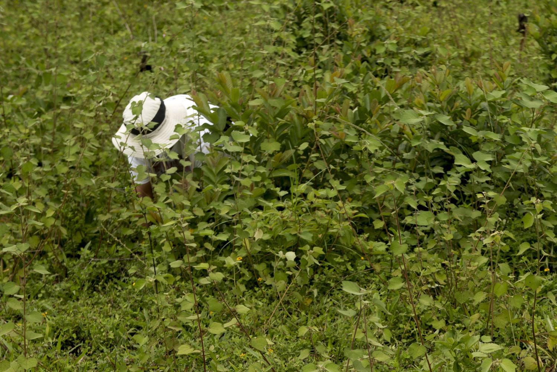 Volunteer_Reforestation_Boise Photographer-6.jpg
