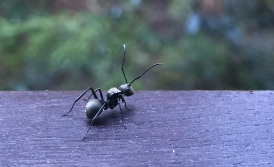 3. Ants (family Formicidae)