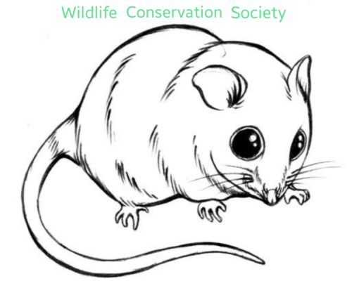 Wildlife Conservation Society - UoM