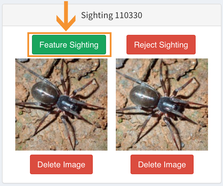 ' Feature Sighting '