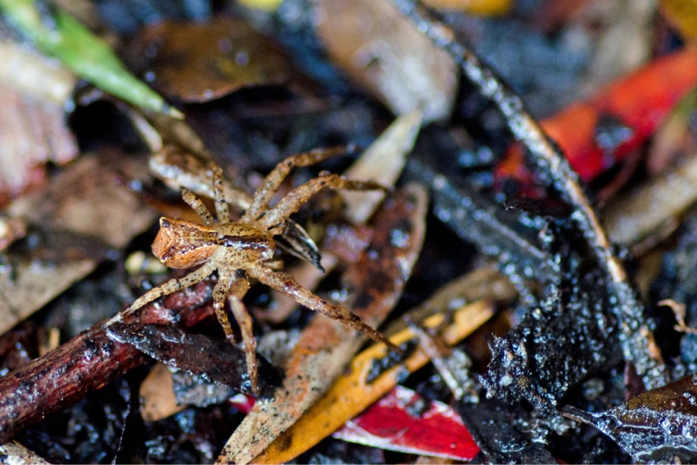 Image:  Lynx Spider by Melinda  , CC BY-NC