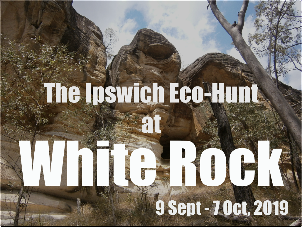 Ipswich Eco-Hunt.png