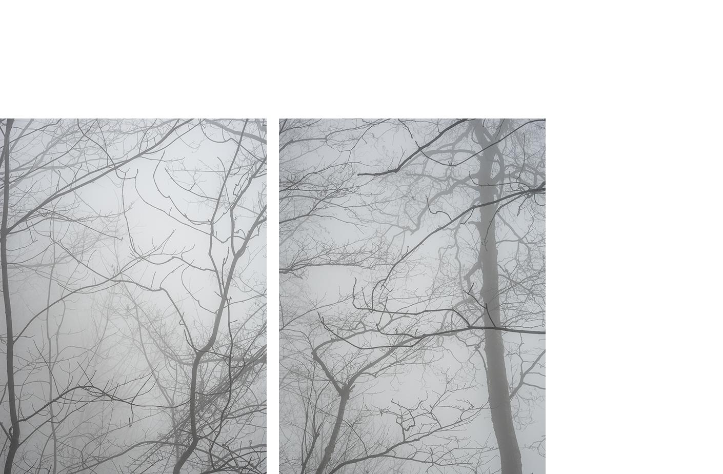 4699-20 Random Pairings #20 4699-19 Random Pairings #19  Pigment Print 5.25 x 7.00 inch Image Size 8.50 x 11.00 inch Paper Size 2 EDP / 4AP