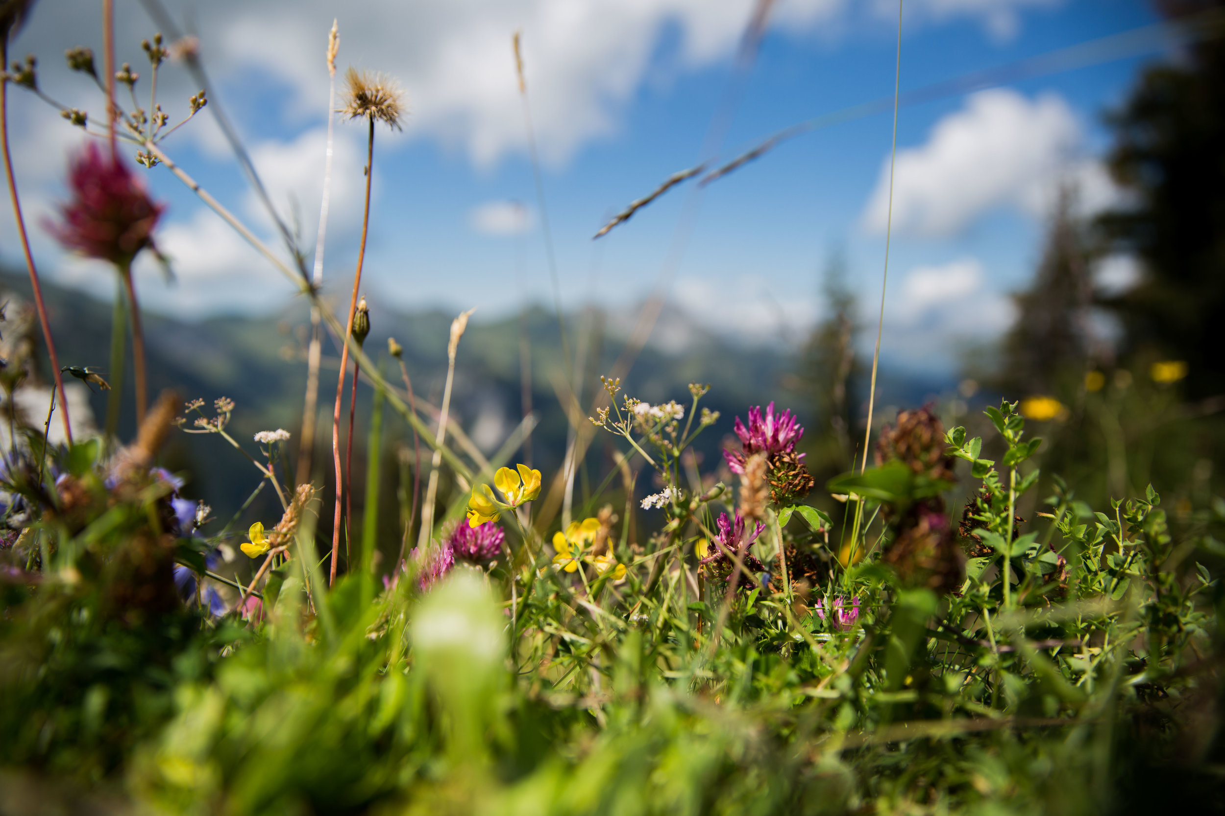 NickHopper_LeGrandBellevue_Gstaad-7243.jpg