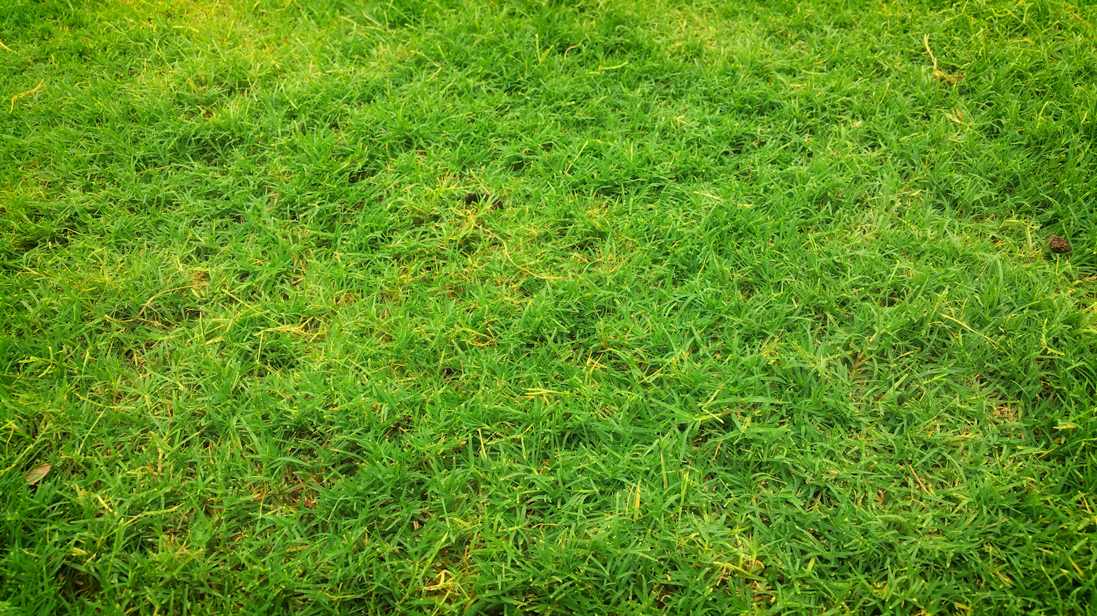 Lawn rating: straggly.