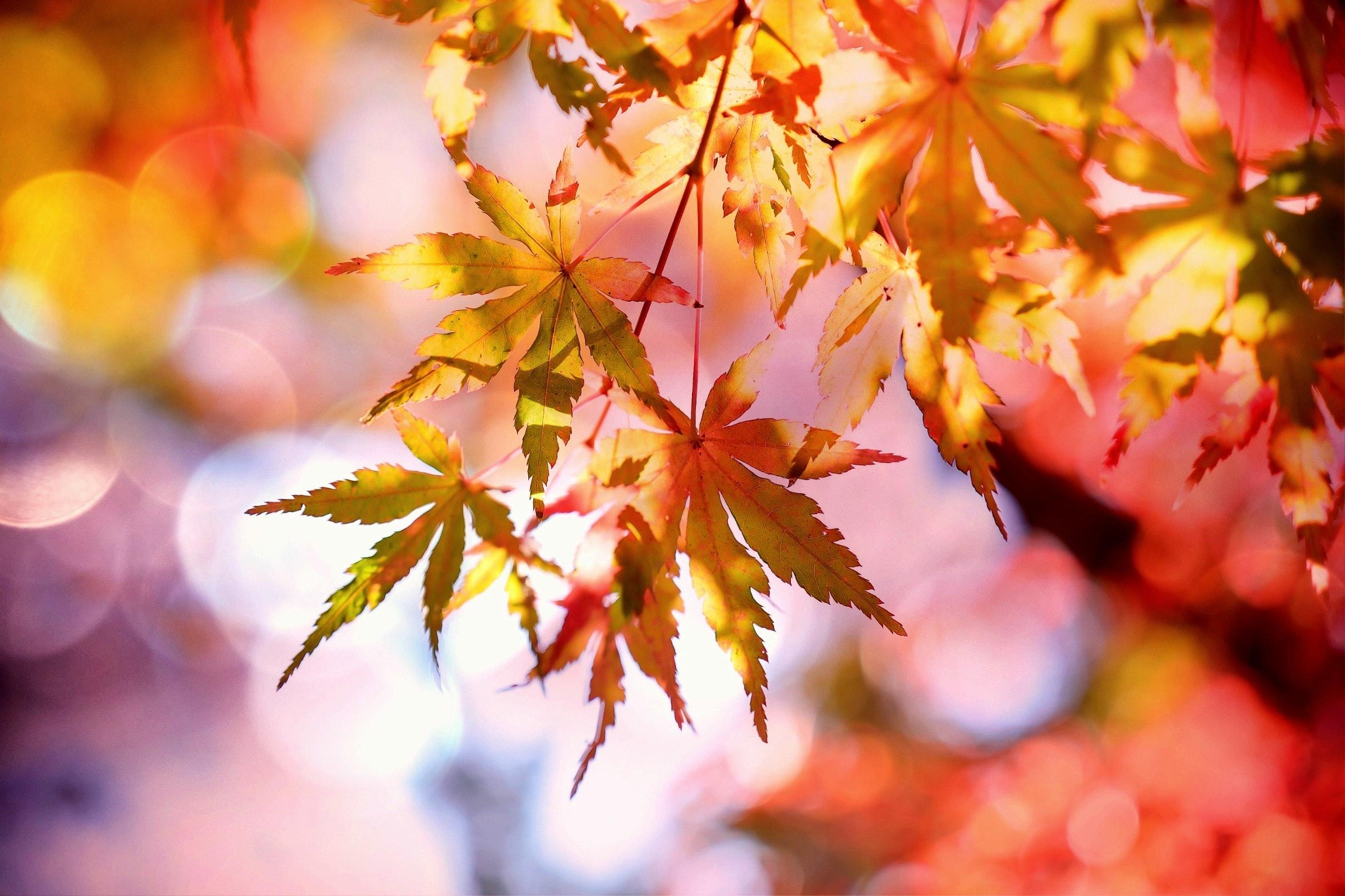 autumn-autumn-colours-autumn-leaves-355302.jpg
