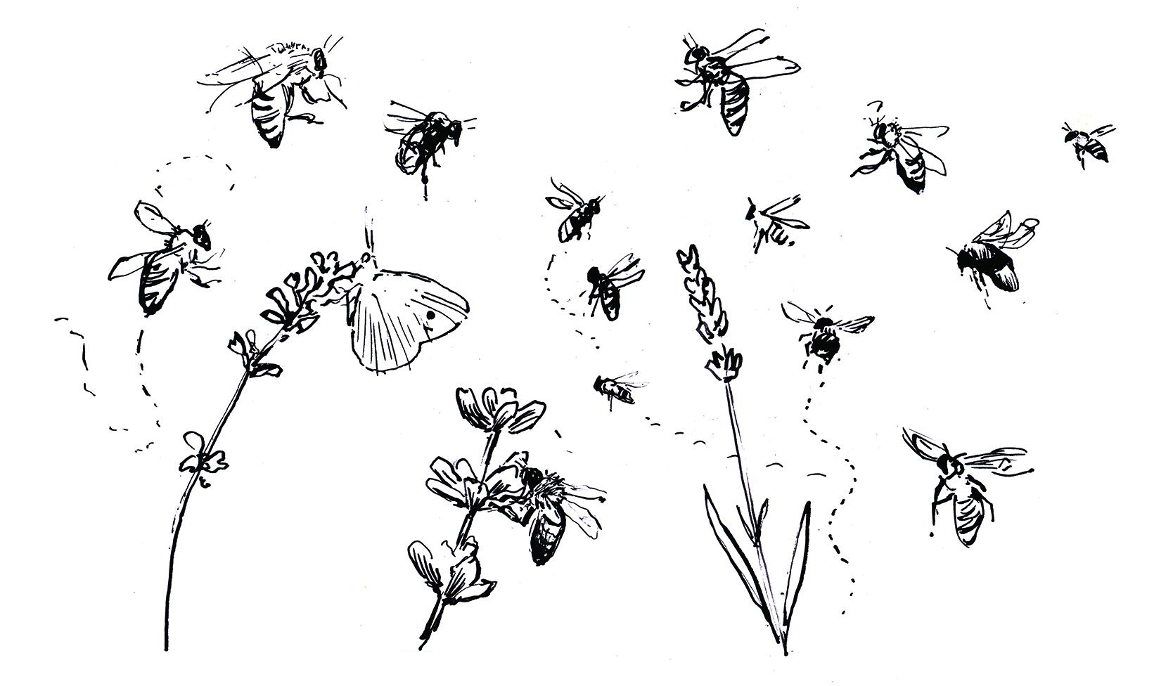 Bees etc