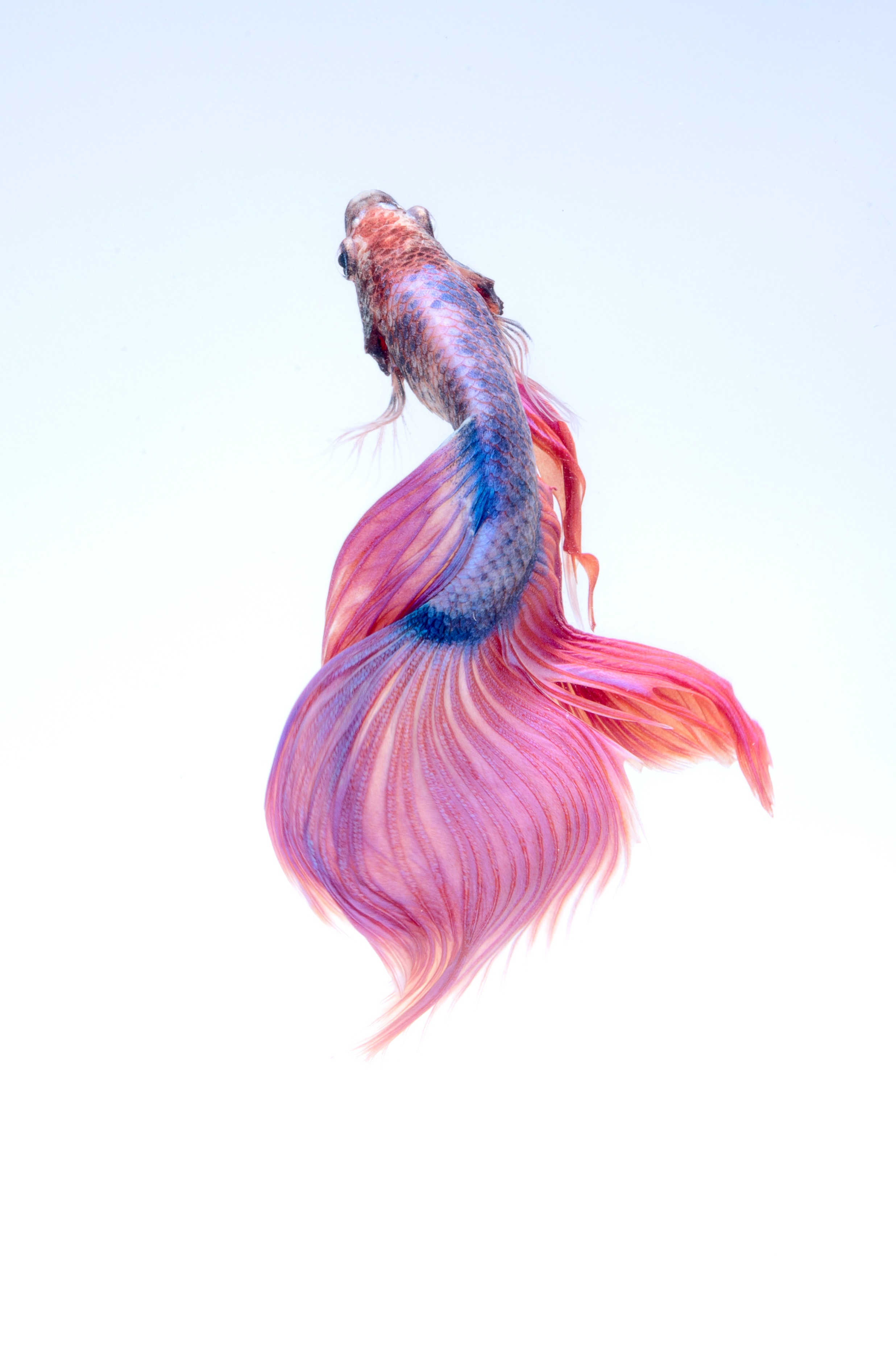 animal-art-beautiful-325045.jpg
