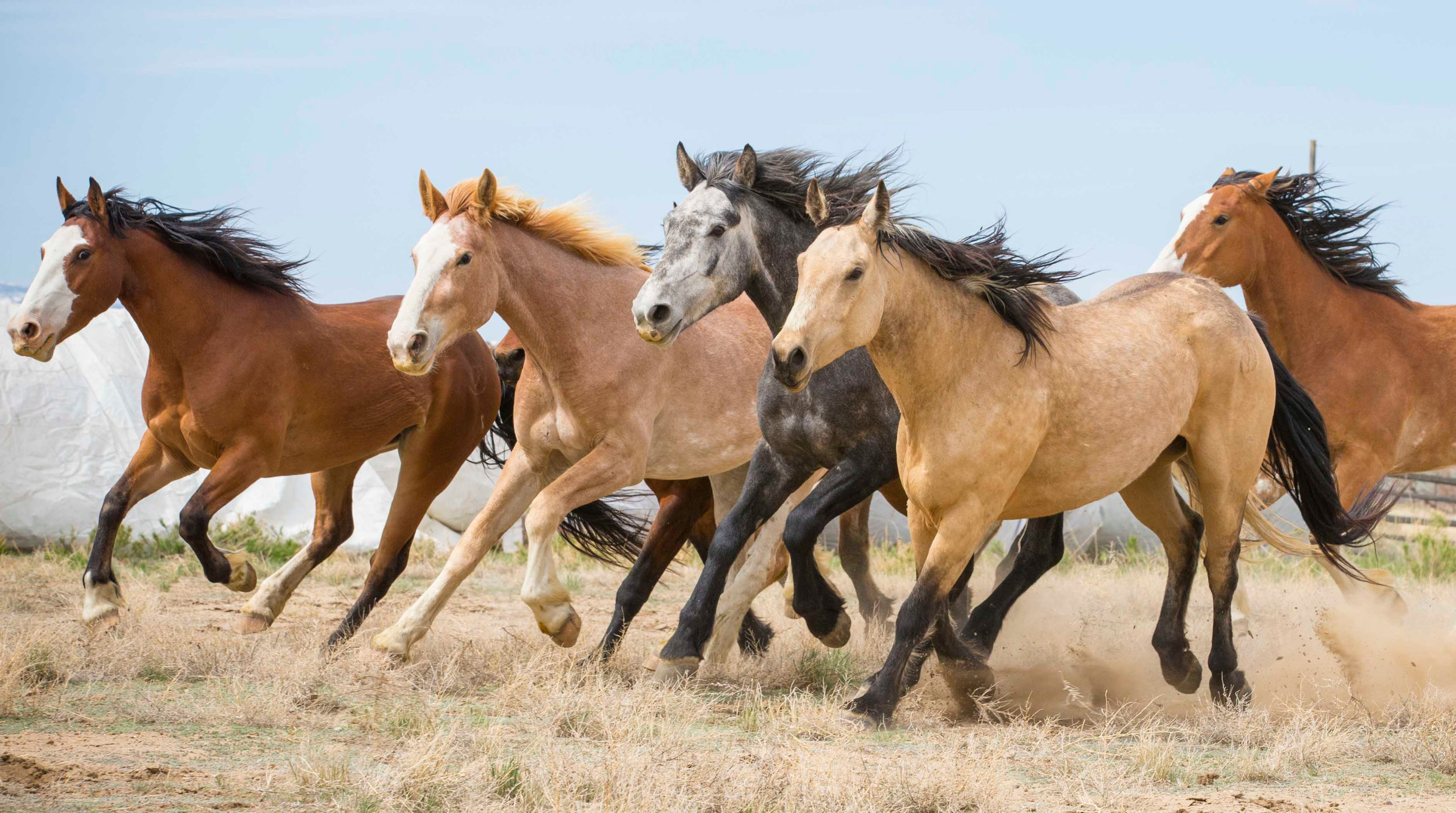 cervi herd web-4587-2.jpg