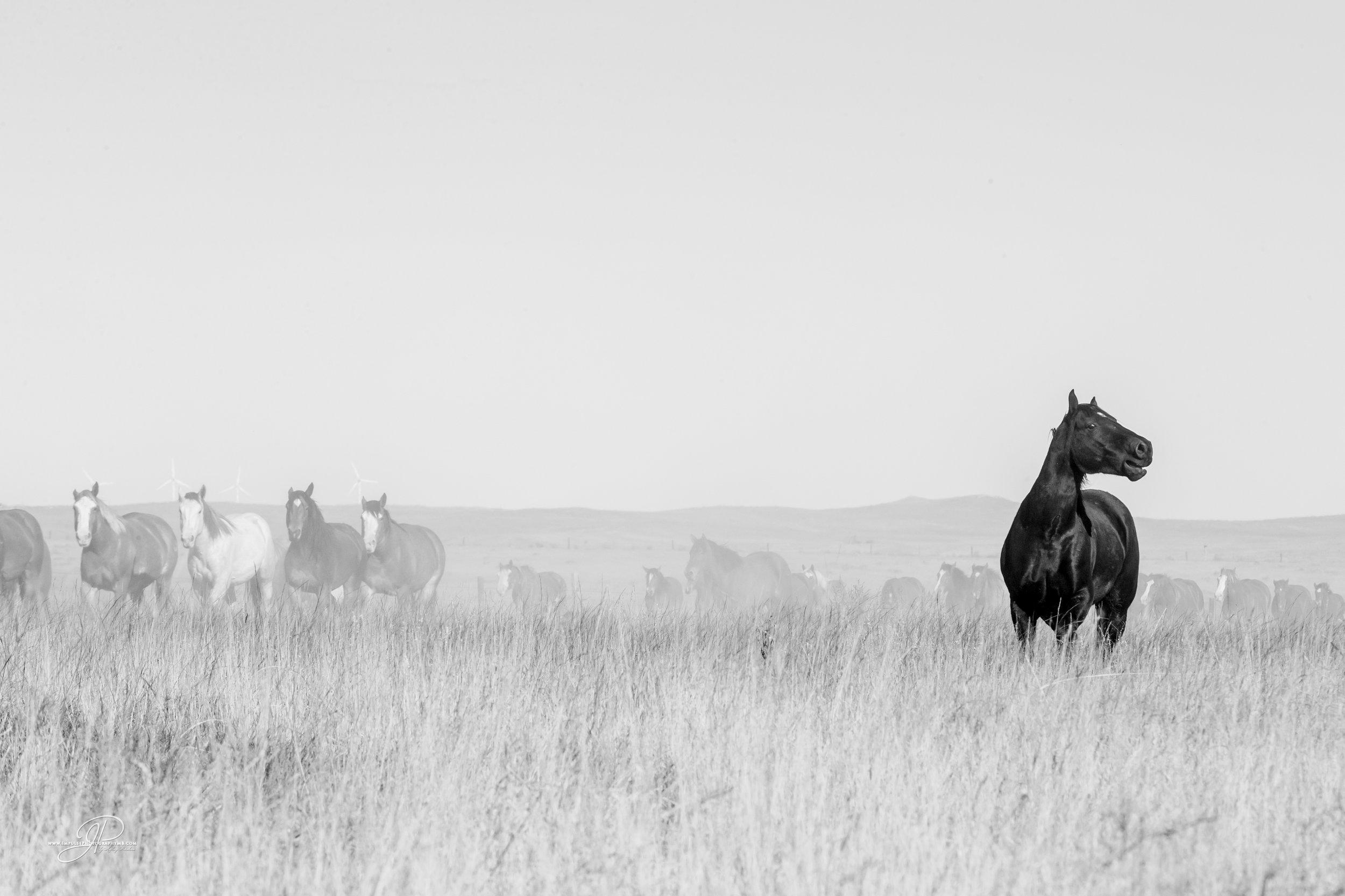 cervi nfr horses 2014-7812-2.jpg