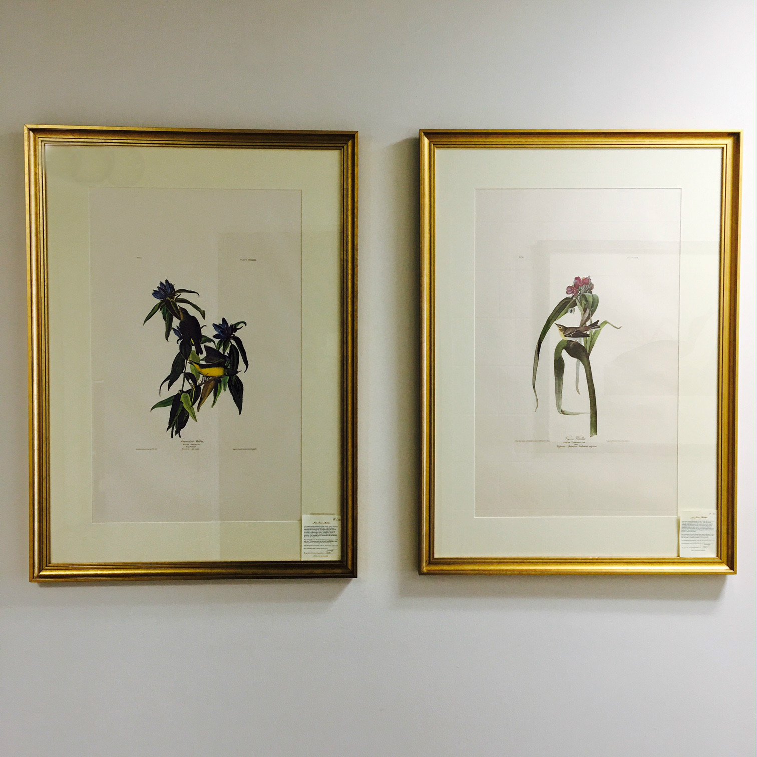 Hall Bickmann framing